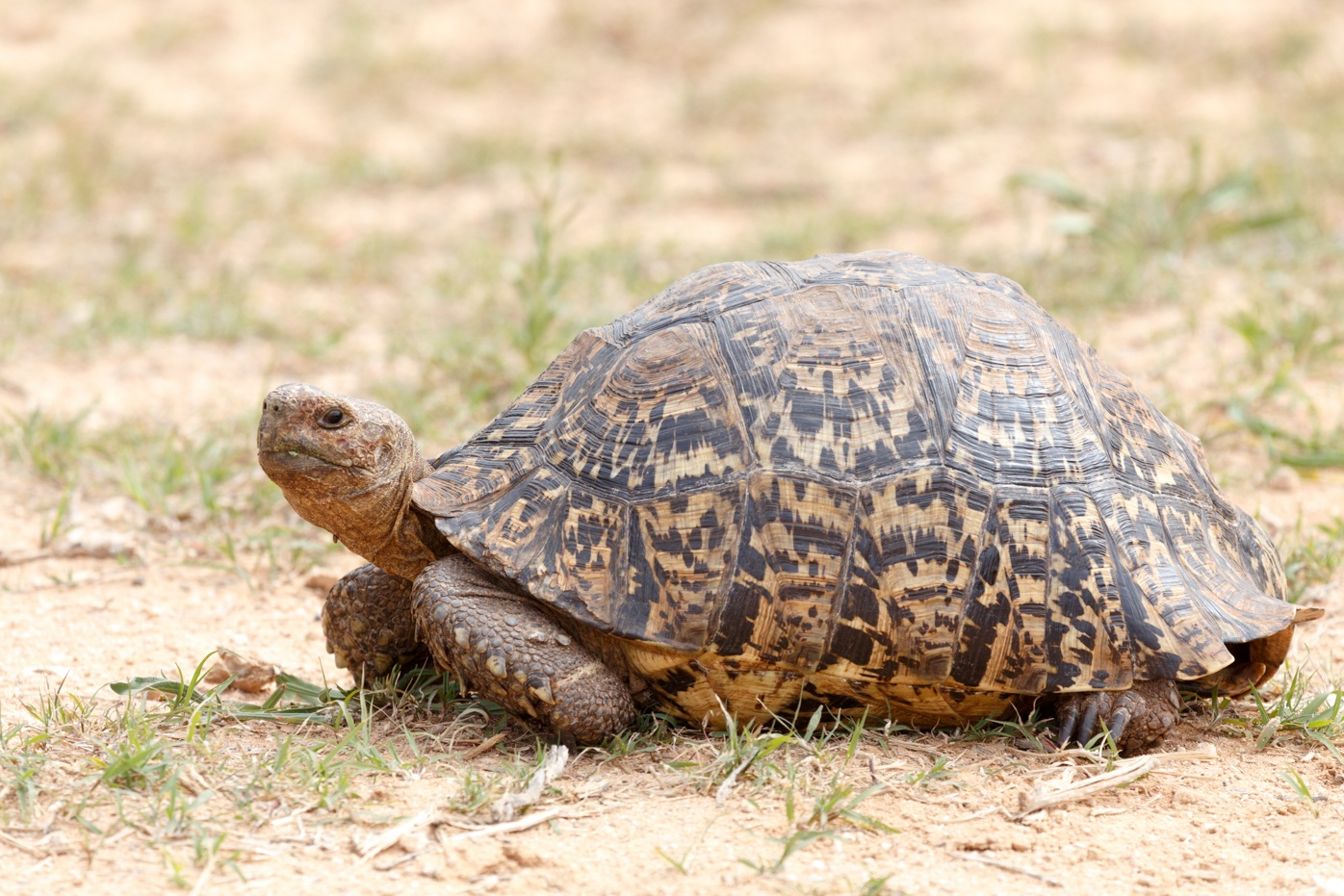 Tortoise just chilling on the ground by Charissa de Scande Lotter