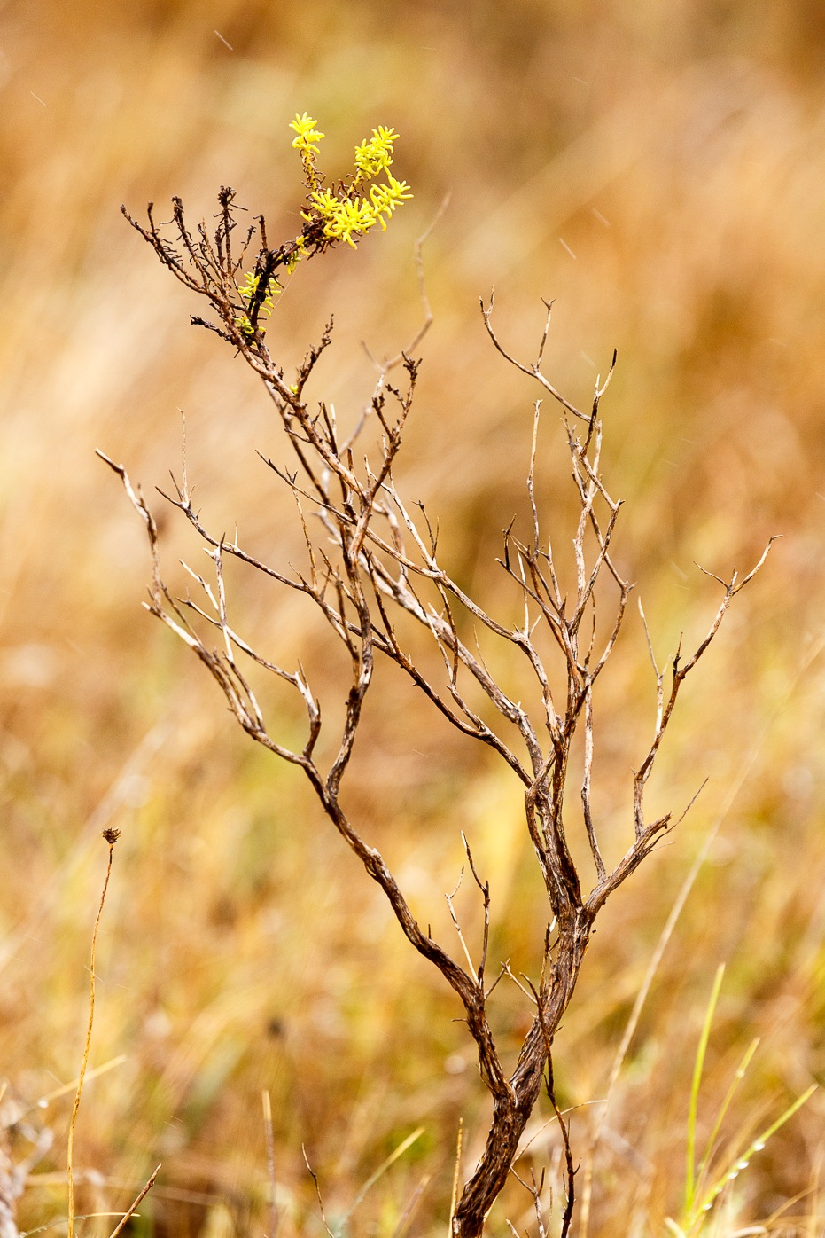 The beginning of new life for the small tree  by Charissa de Scande Lotter