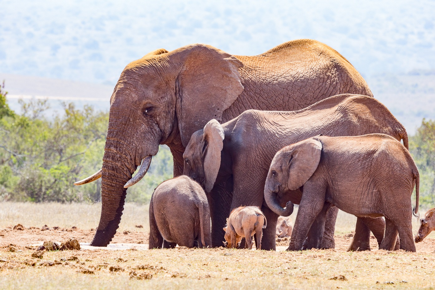 Elephant family together to drink water by Charissa de Scande Lotter