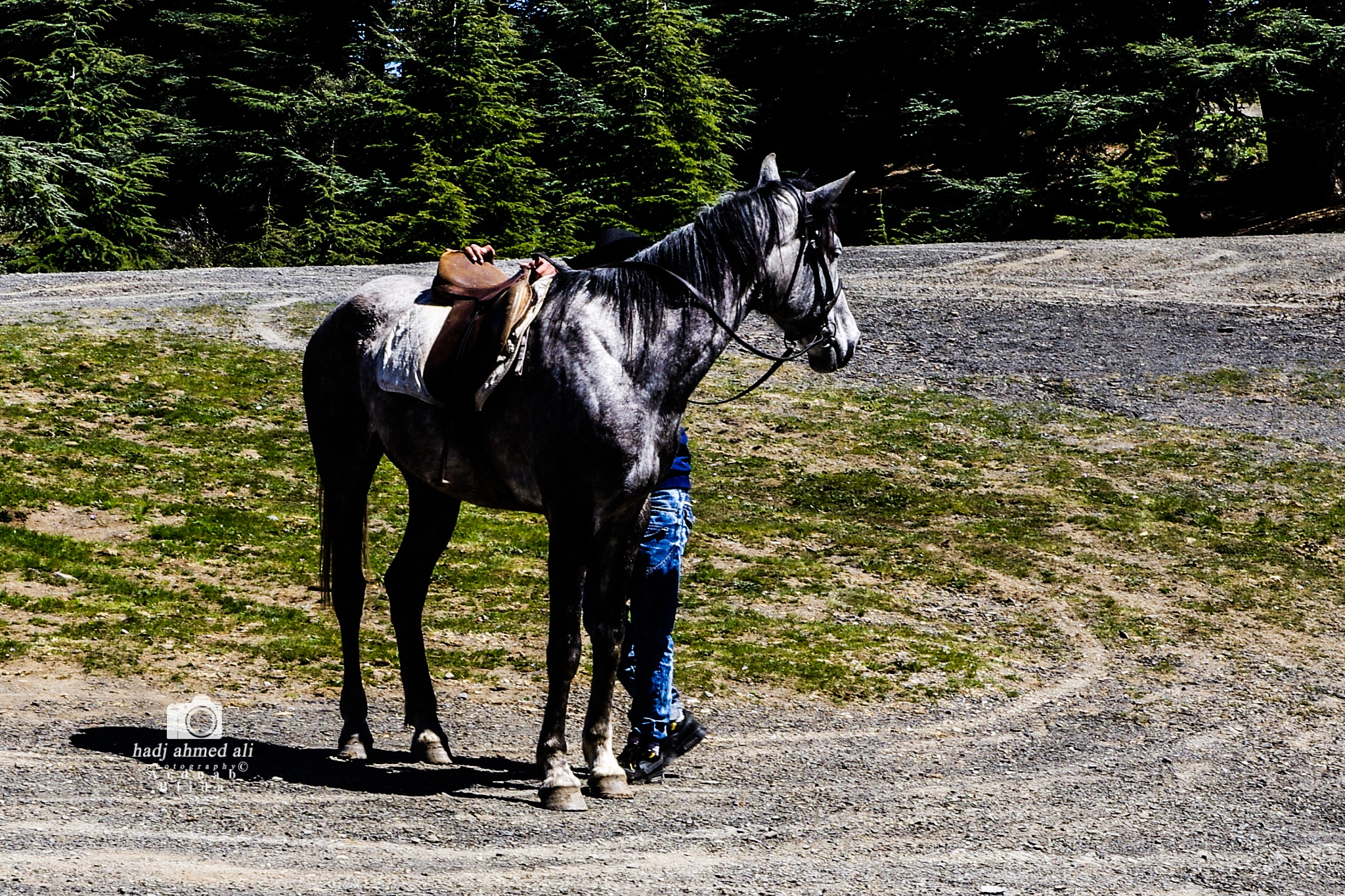 horse by Hadj Ahmed Ali