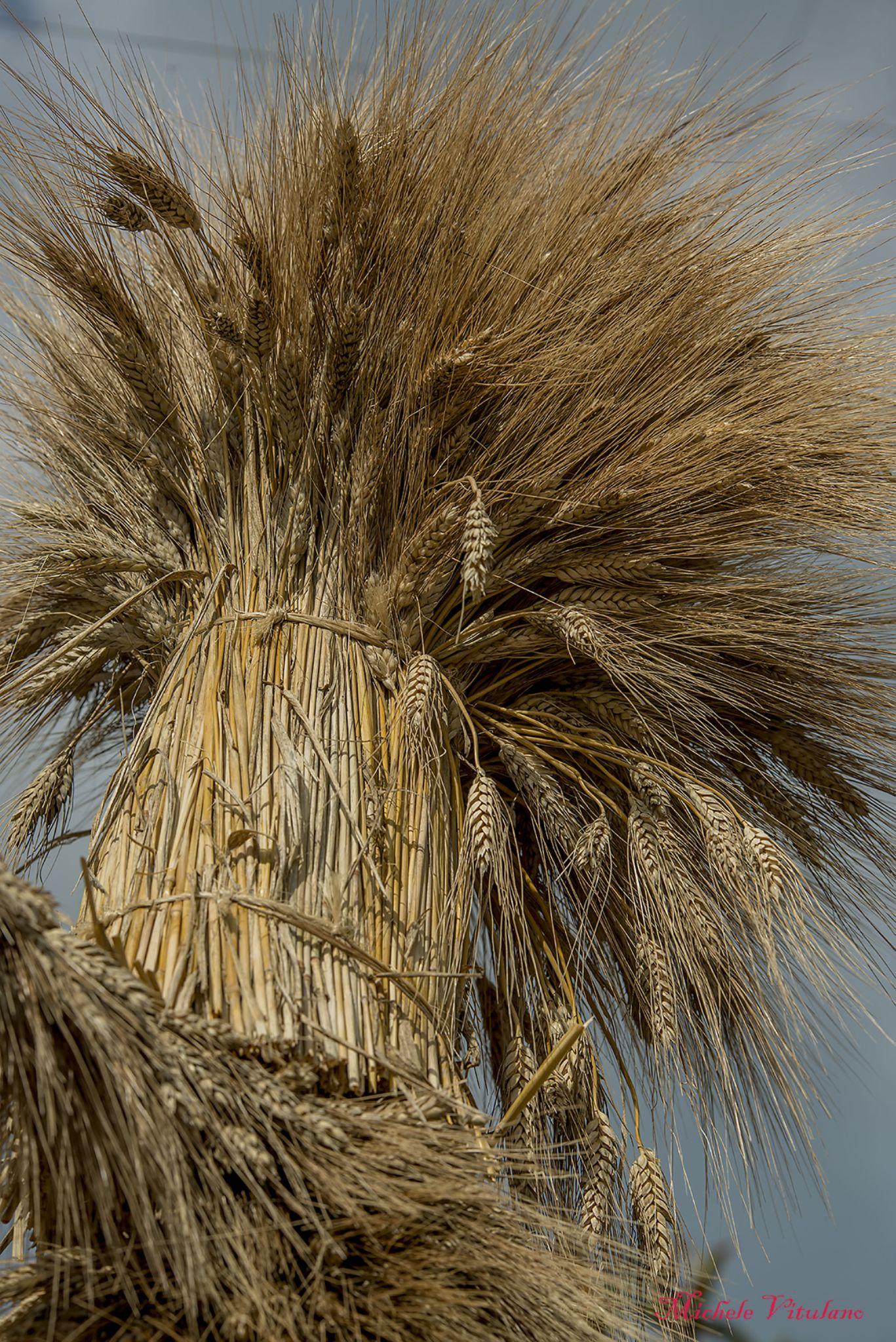wheat by Michele Vitulano