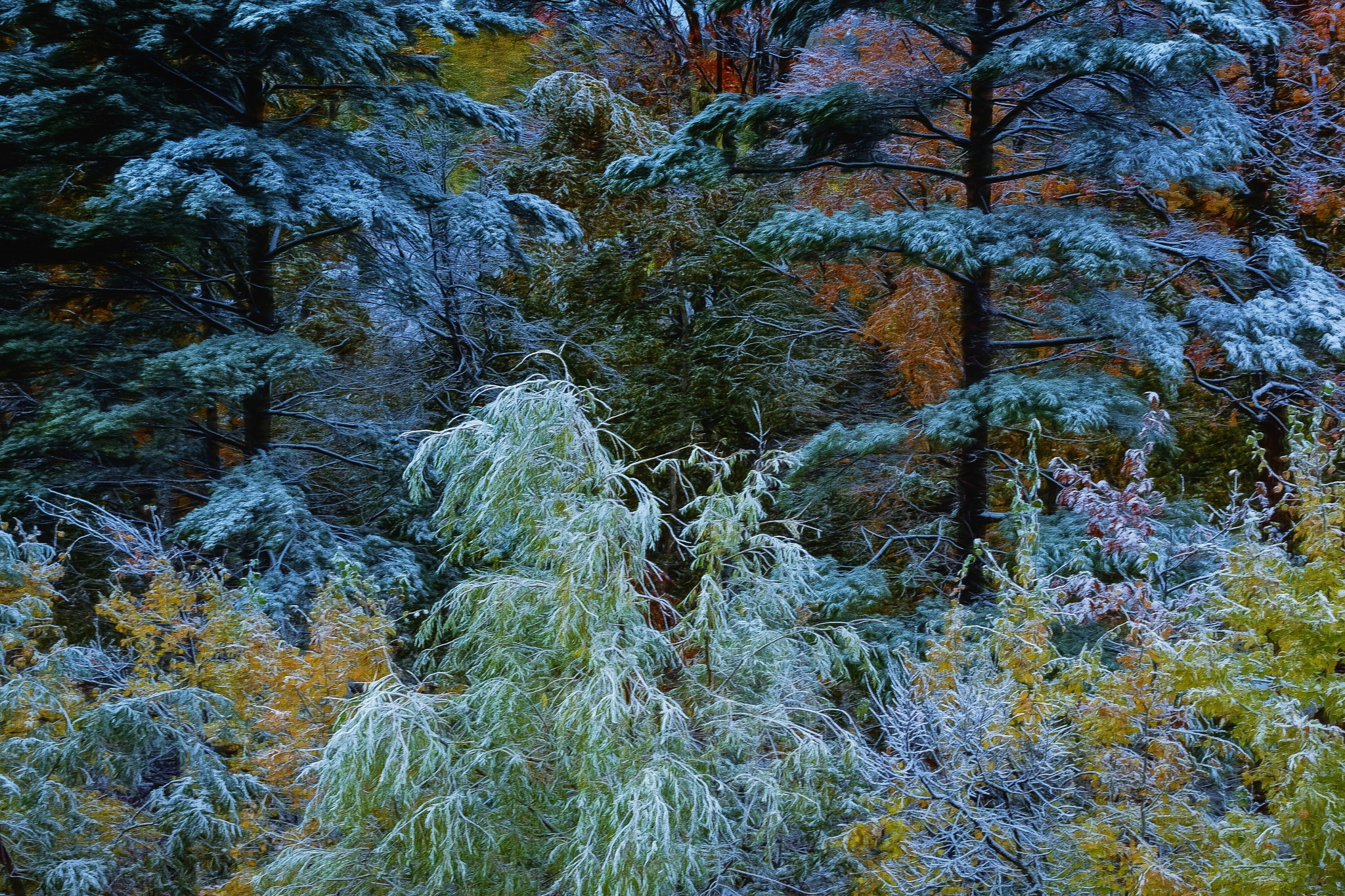 The First Snow by Kevin Hancey
