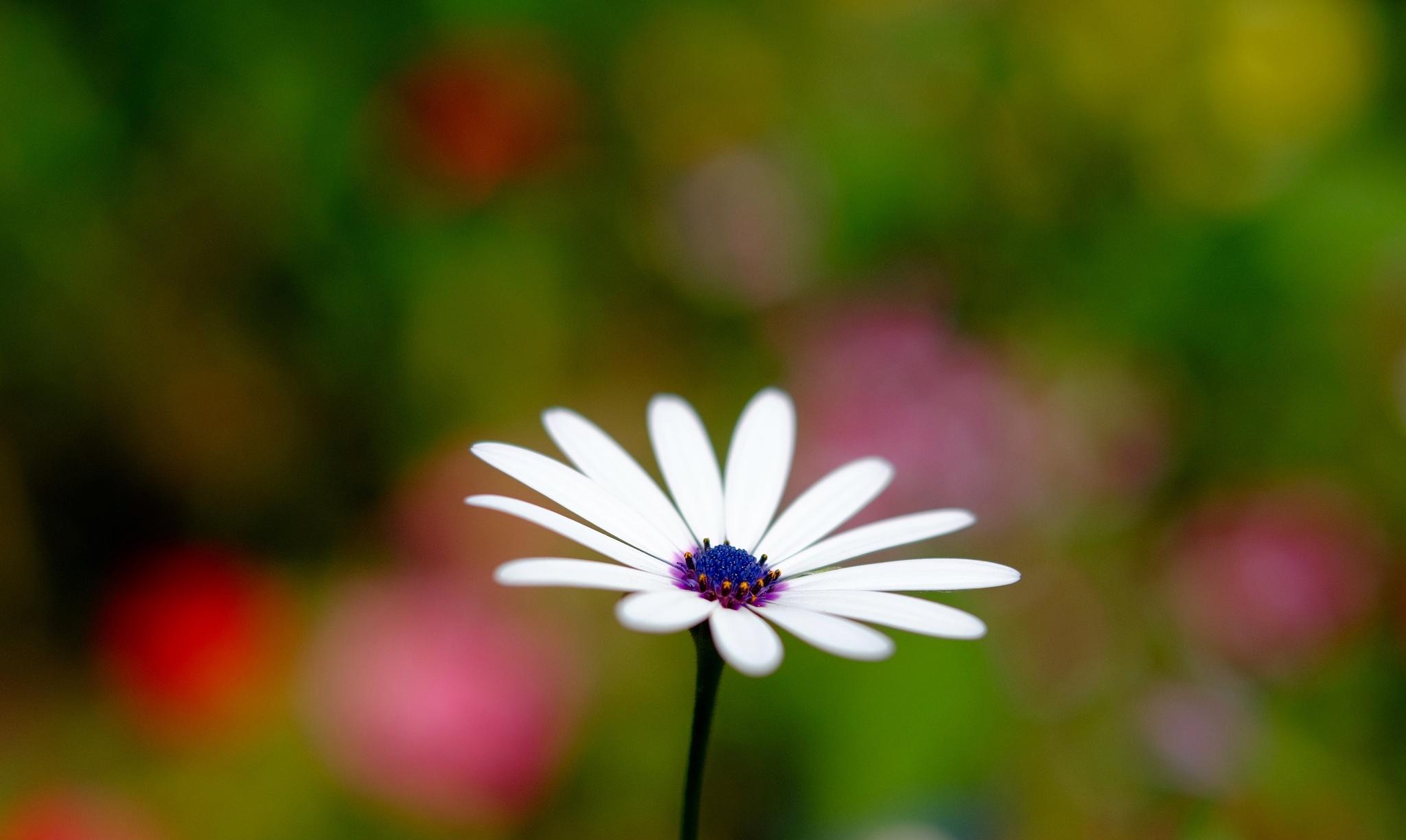Flower by sh1ft