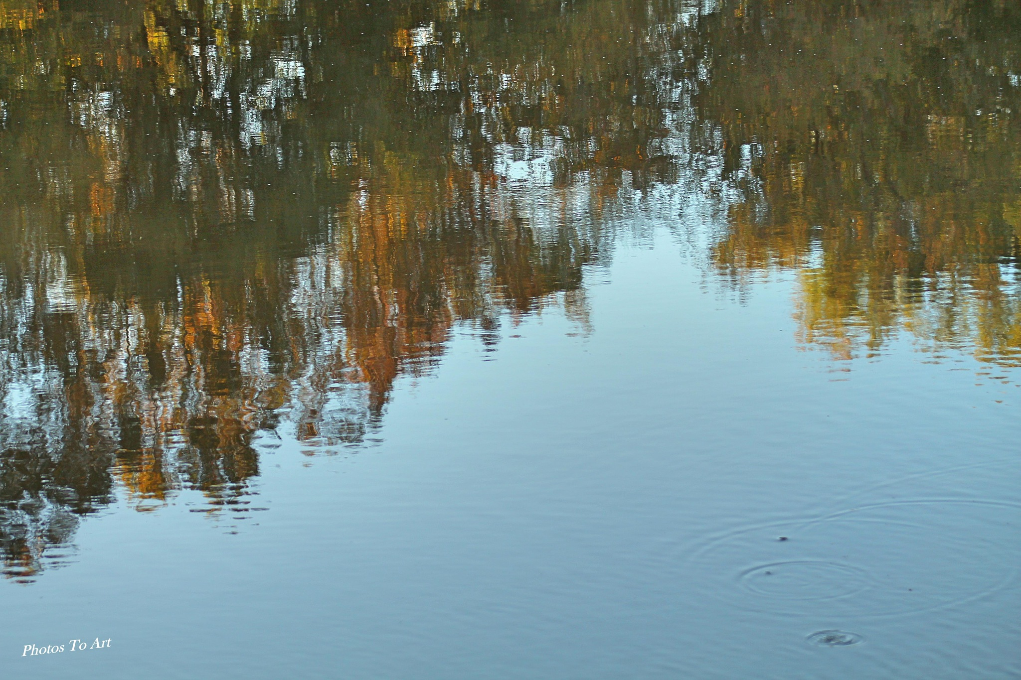 view of fall in the water by Calvin Burdette