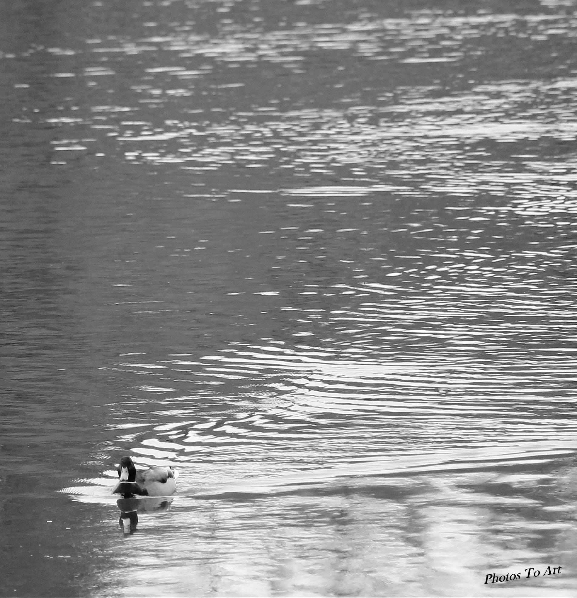 the swim by Calvin Burdette