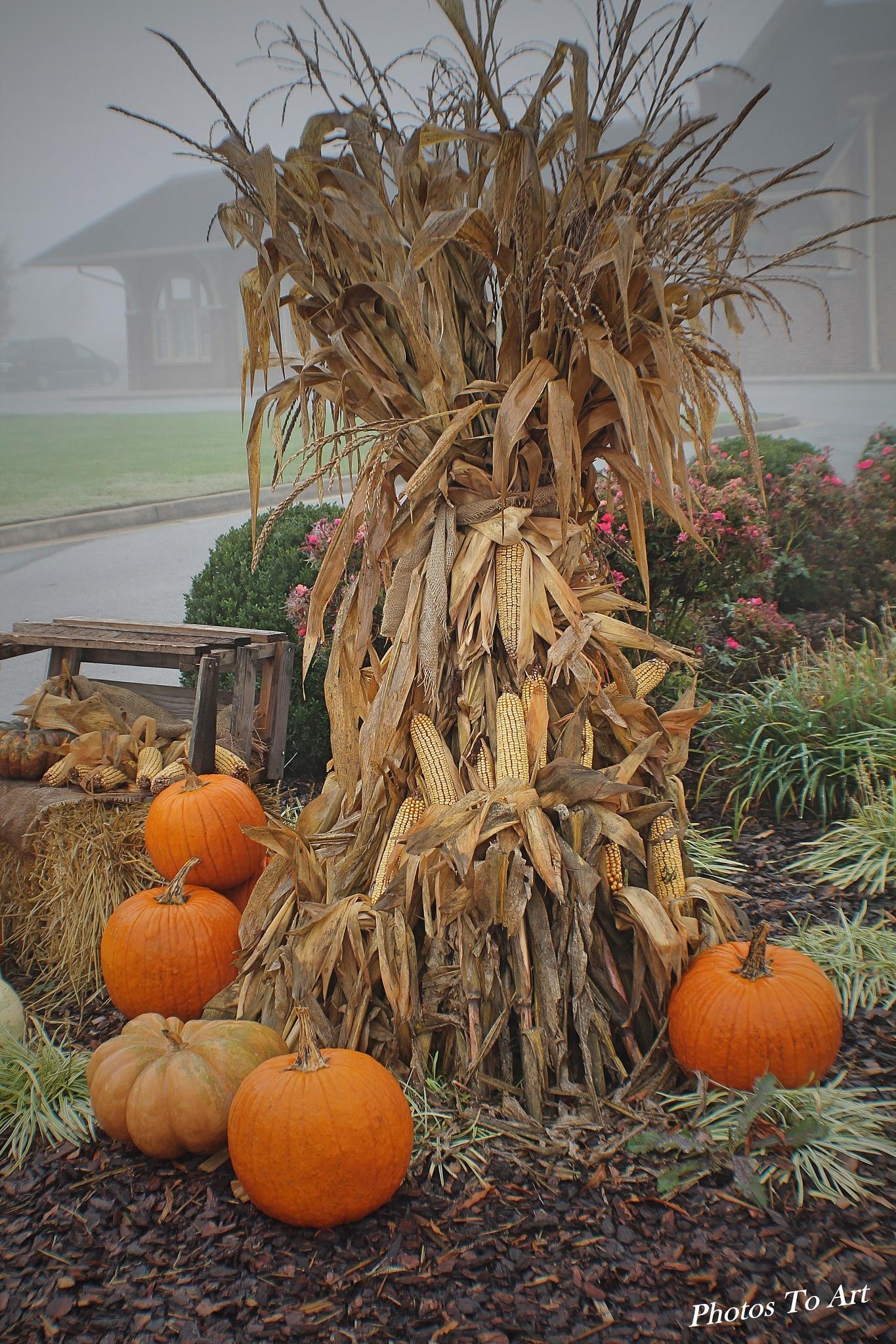 pumpkins and corn by Calvin Burdette