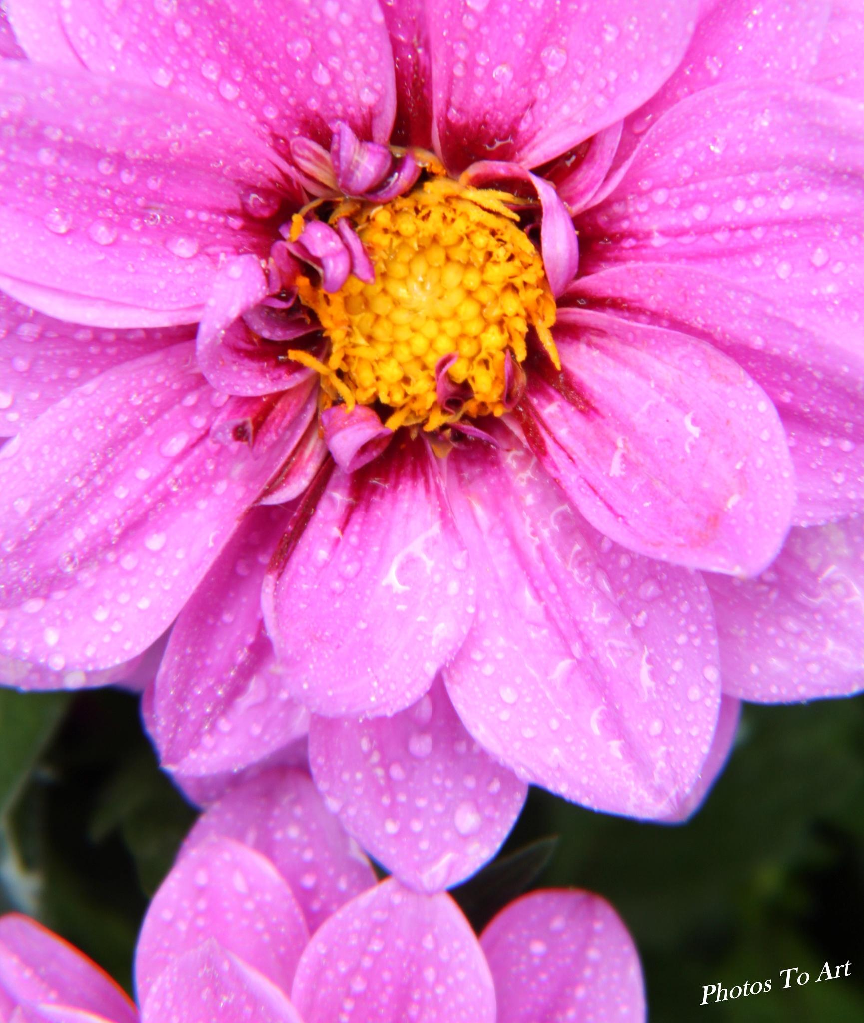 thank you rain by Calvin Burdette