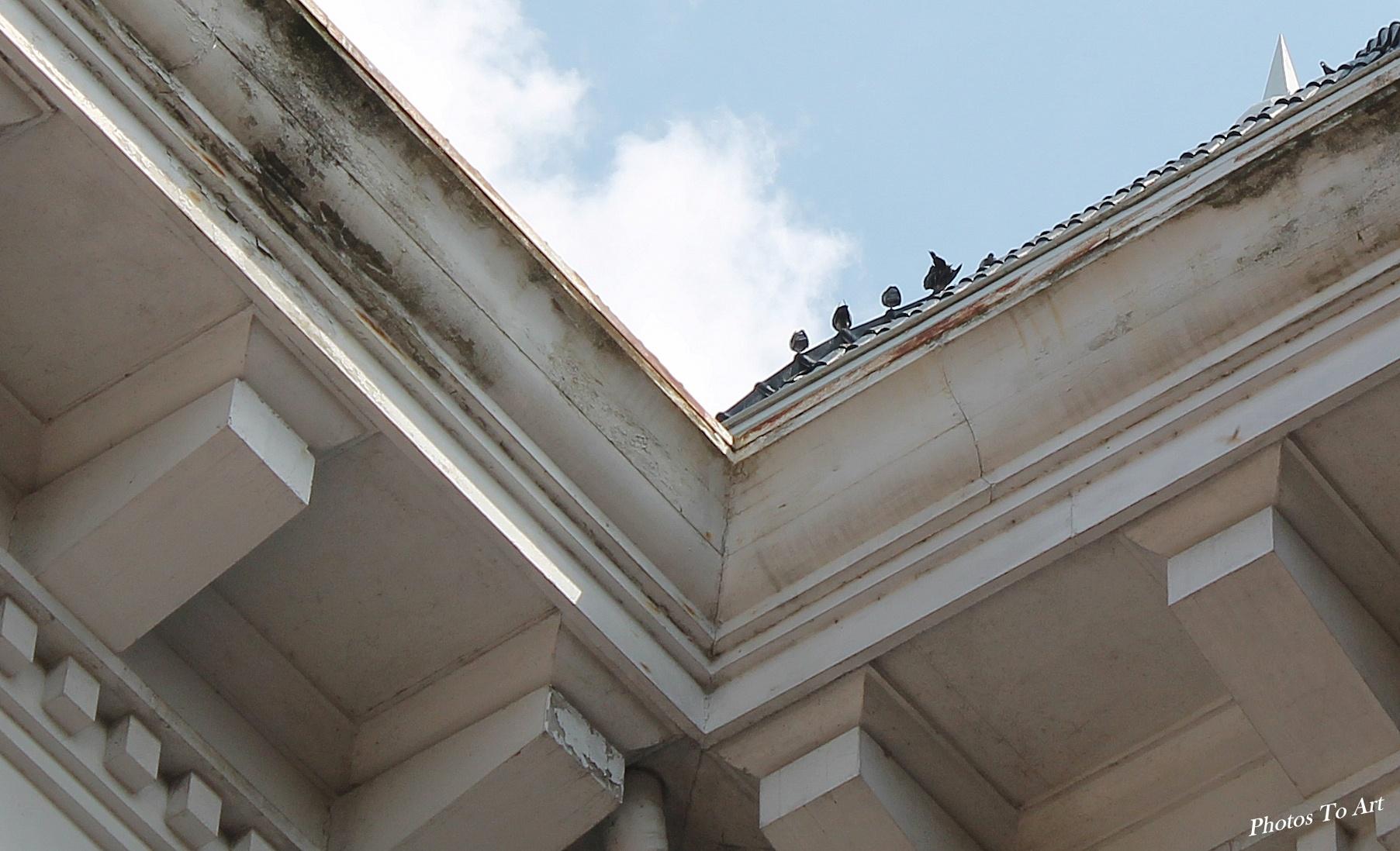 beware the birds by Calvin Burdette