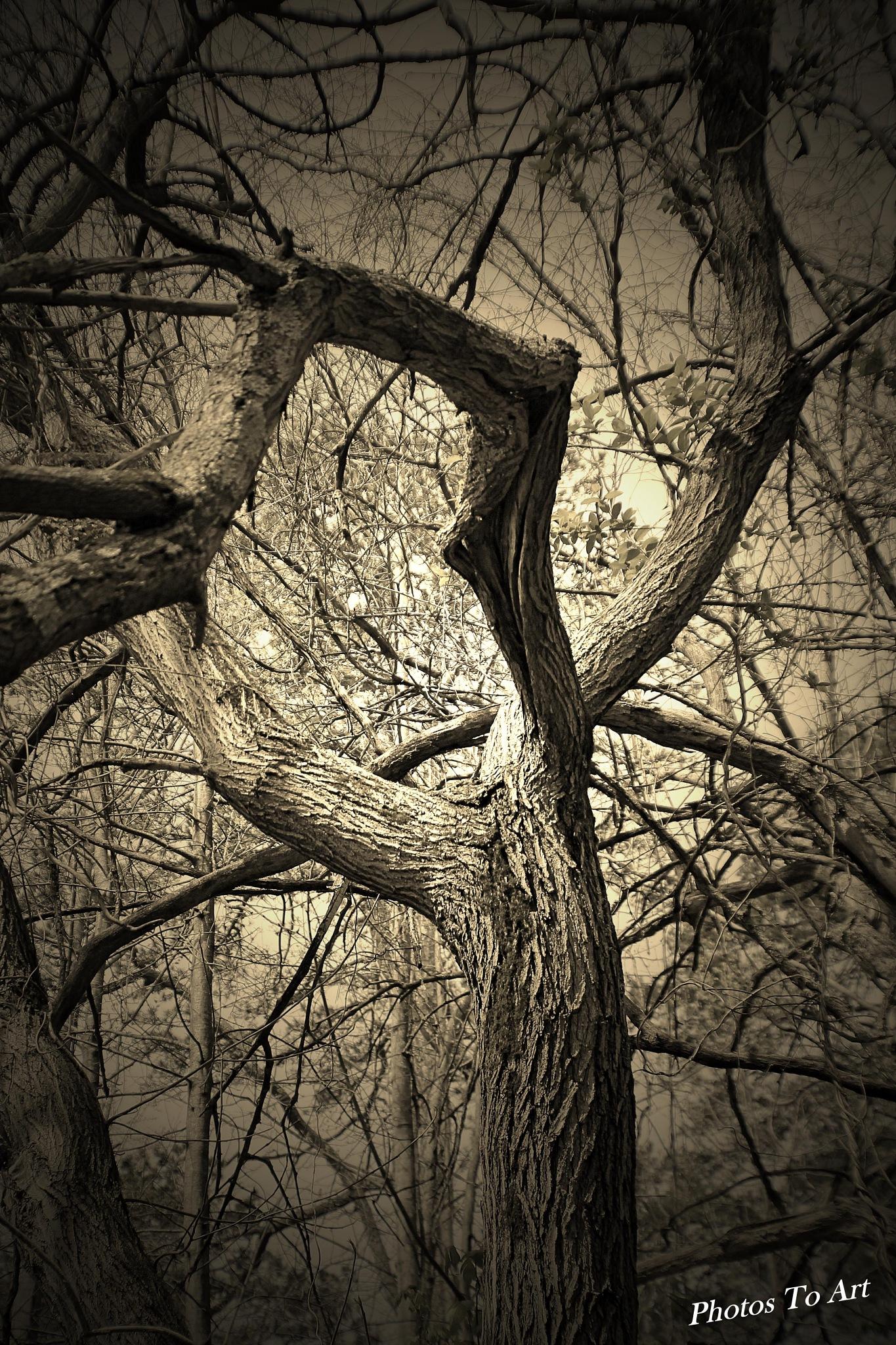 spooky woods by Calvin Burdette