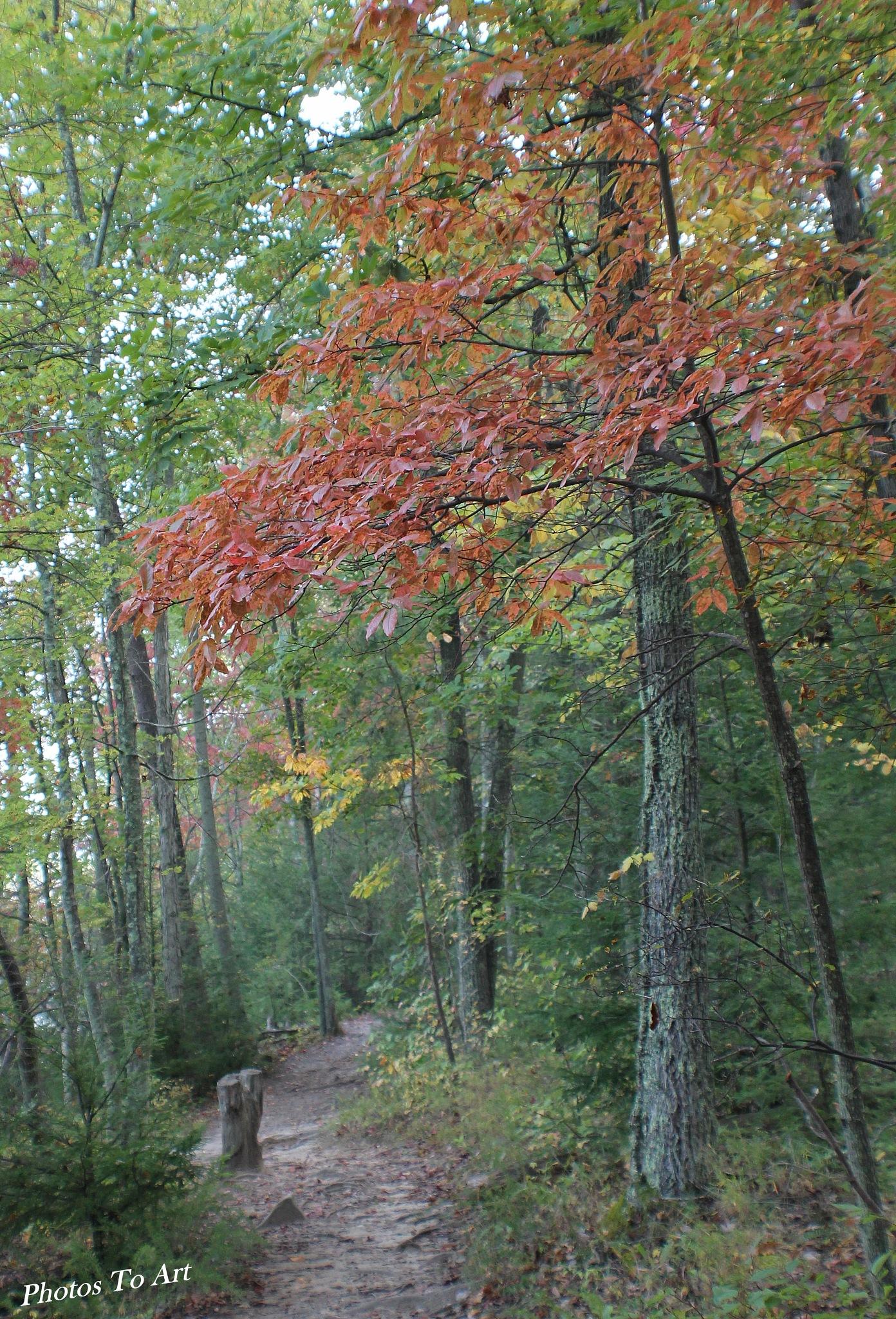 a walk down the path by Calvin Burdette