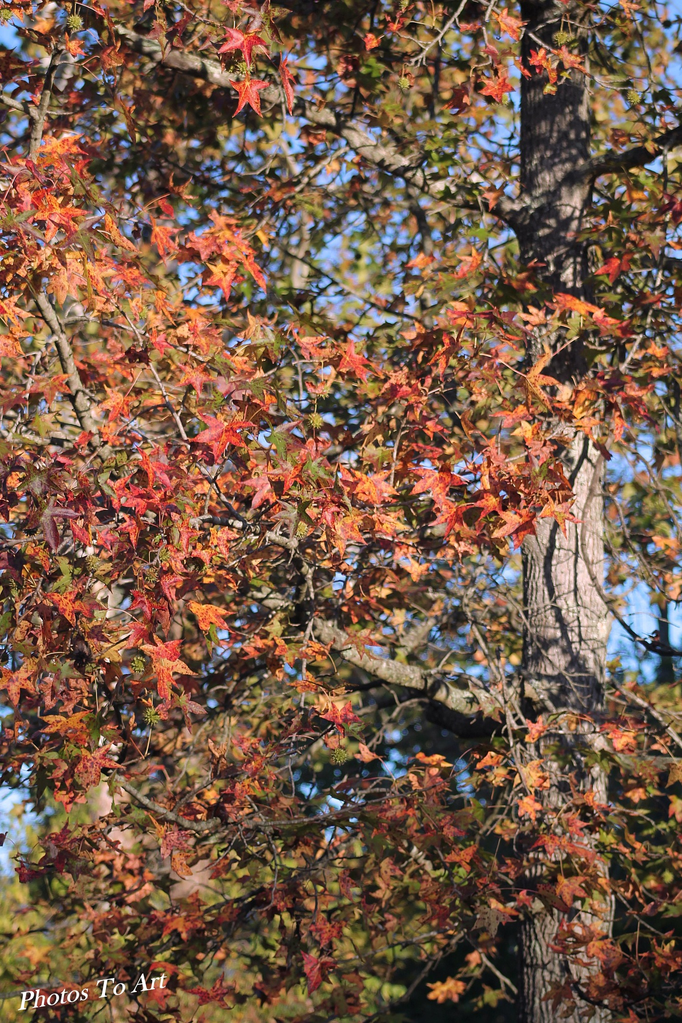 color of fall by Calvin Burdette