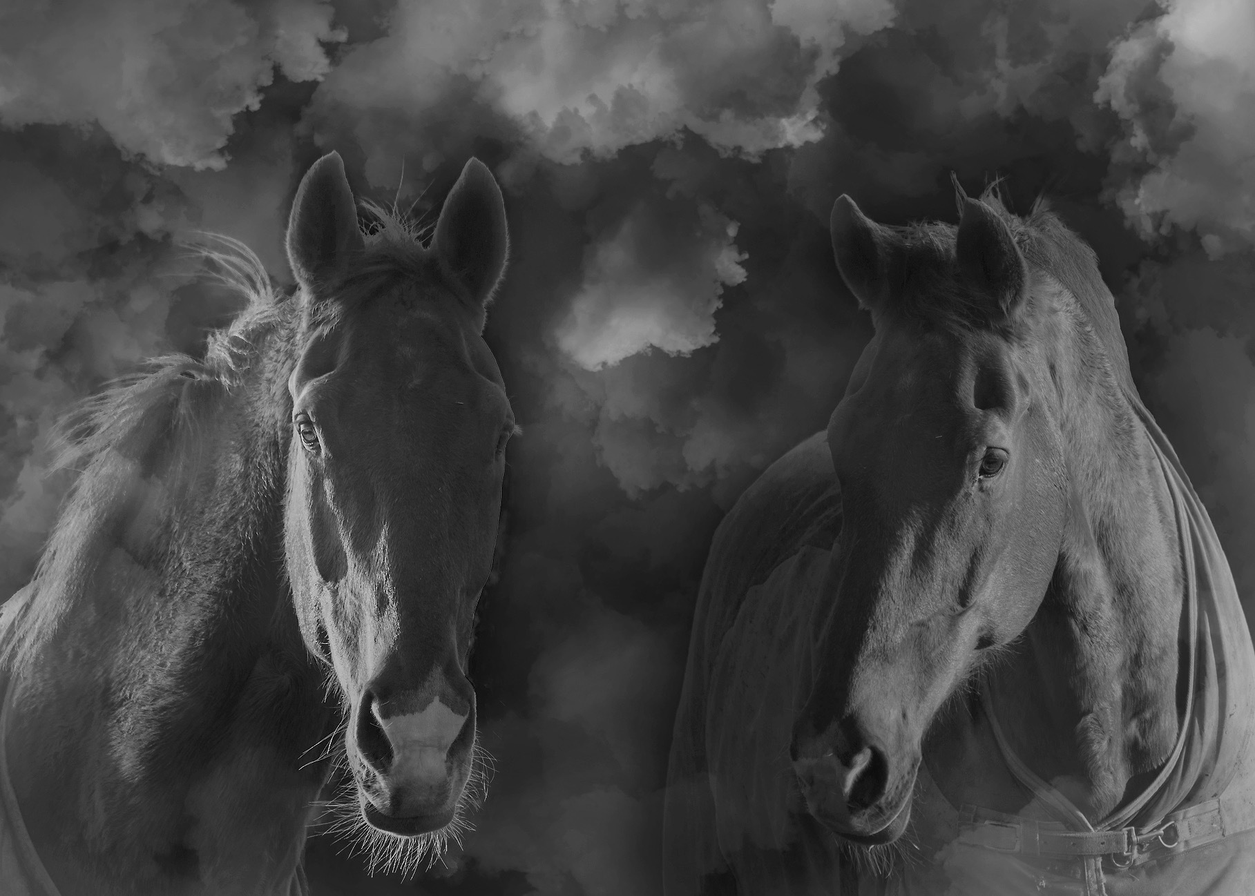 Photo in Black and White #horses #horselover #black and white #edit #photoshop