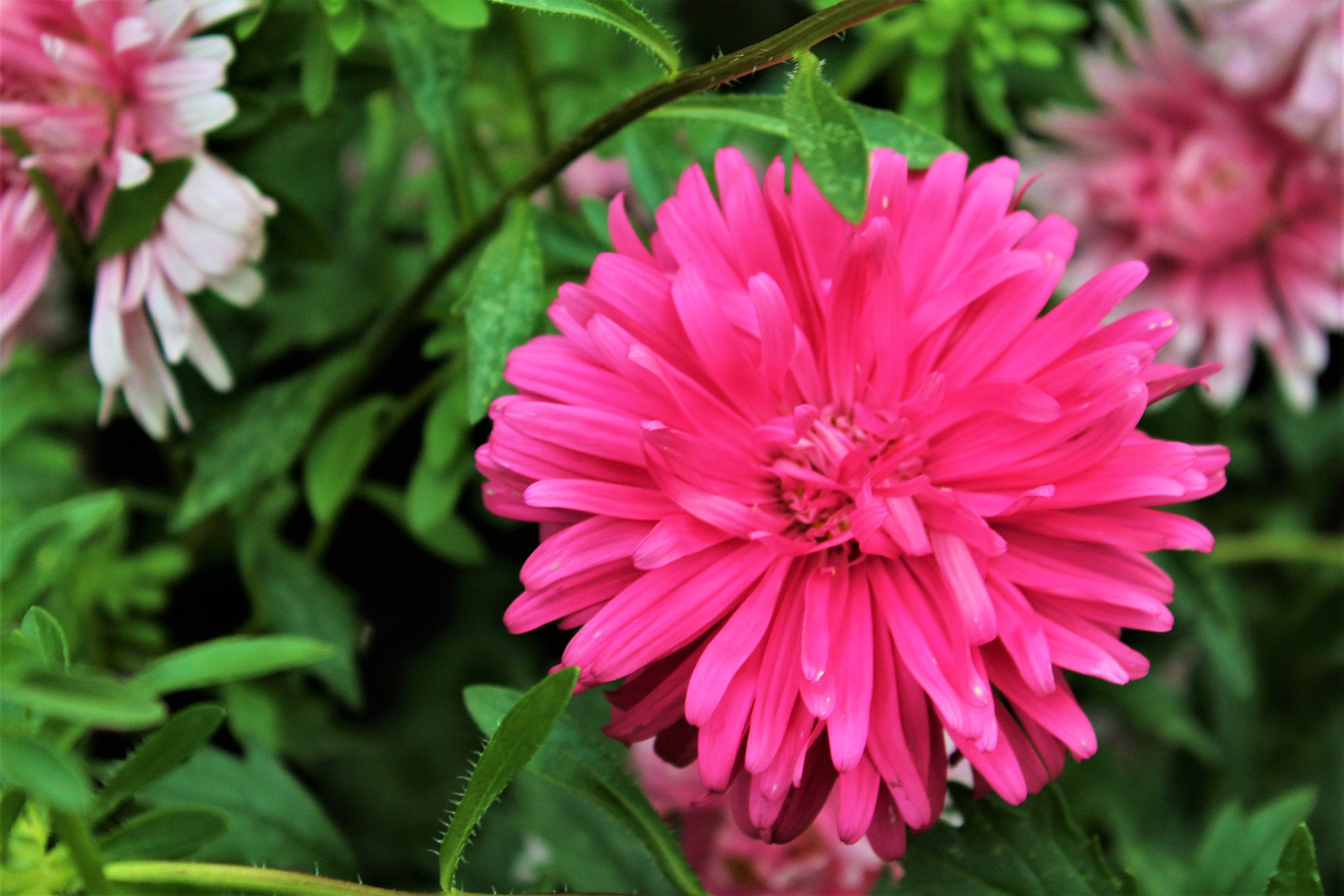 flower for the day by Jim Thoma