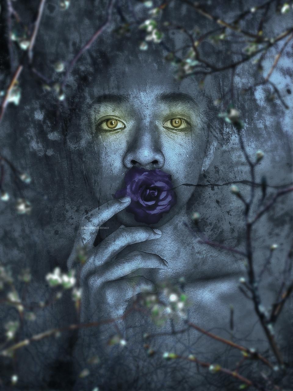 """ Rose "" by John Adams Emnace"