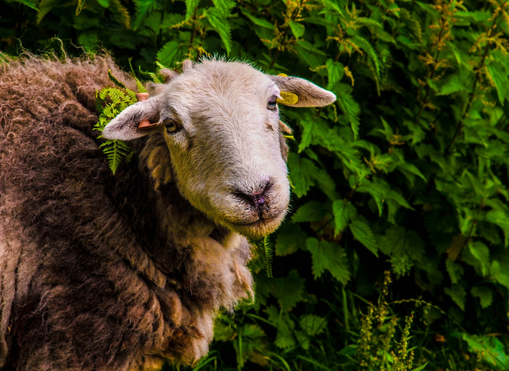 Did you say mint sauce by RedversPhotographic