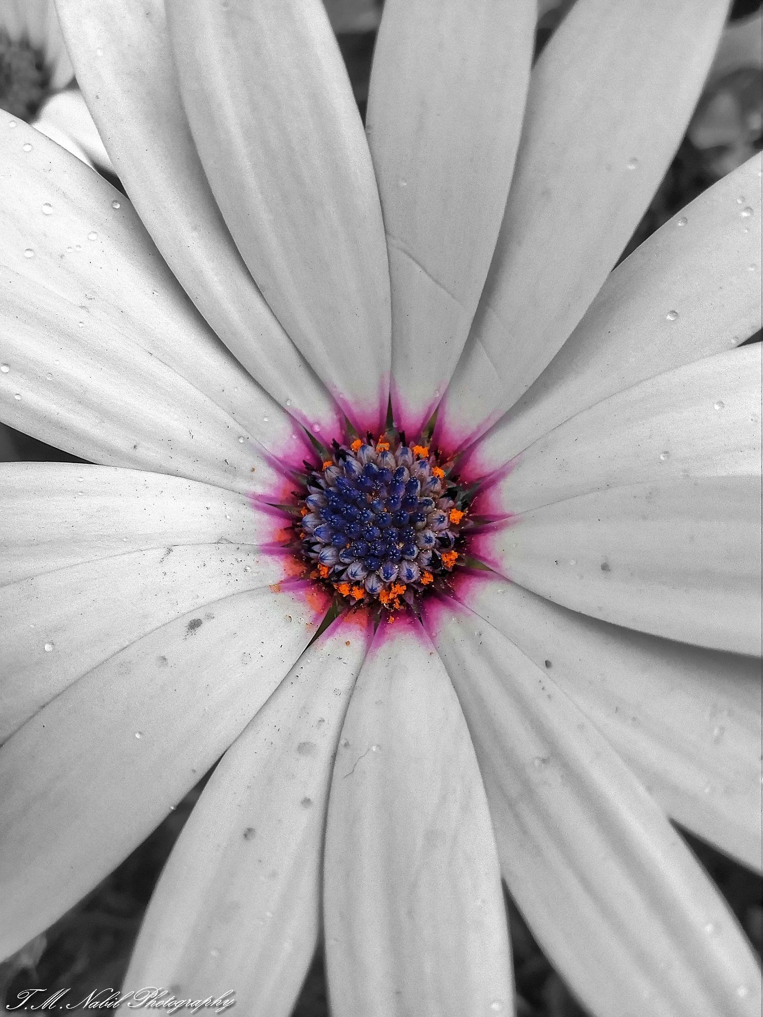Flower by Toumi Mohamed Nabil