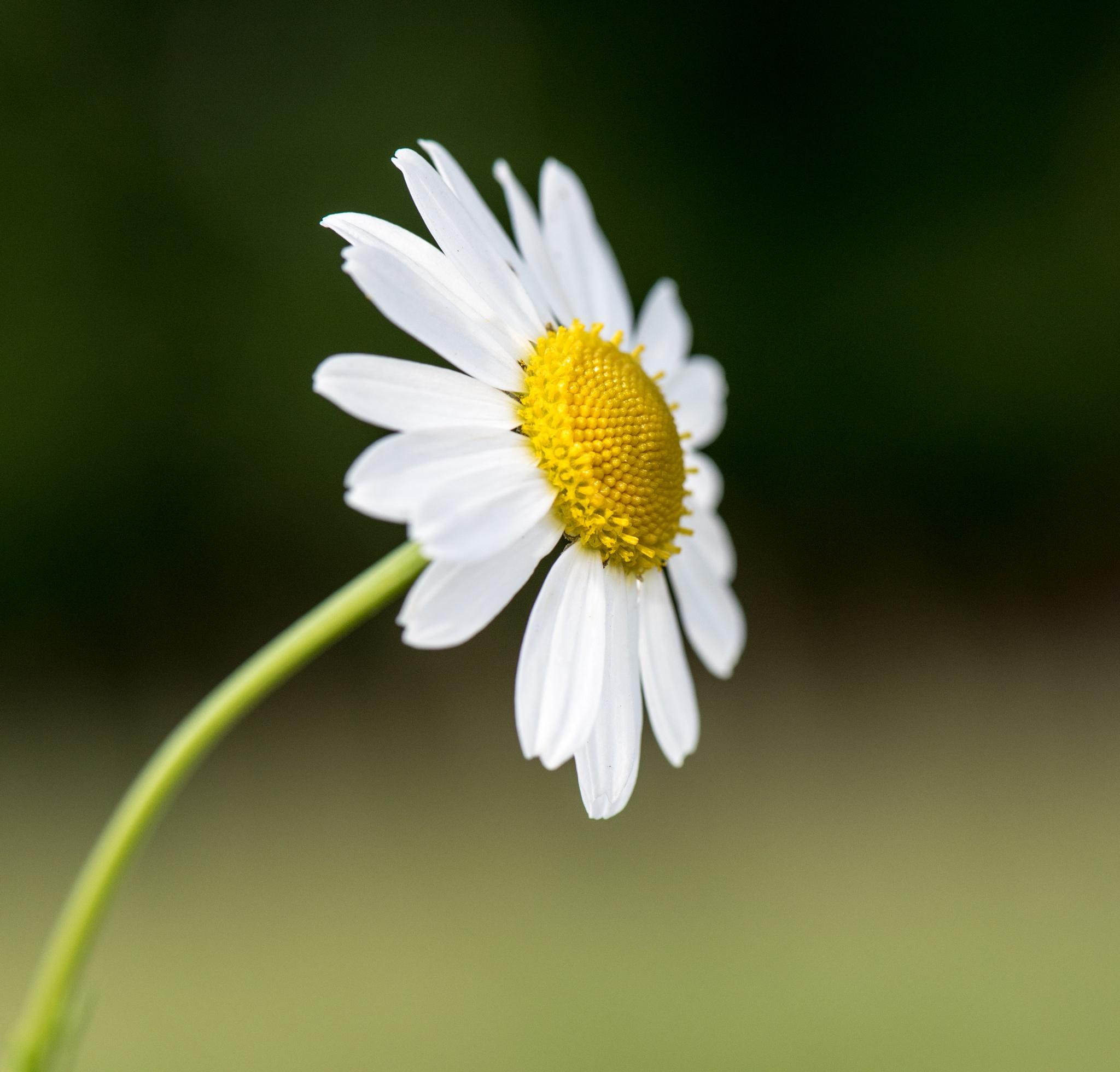 flower by Alex Mandl