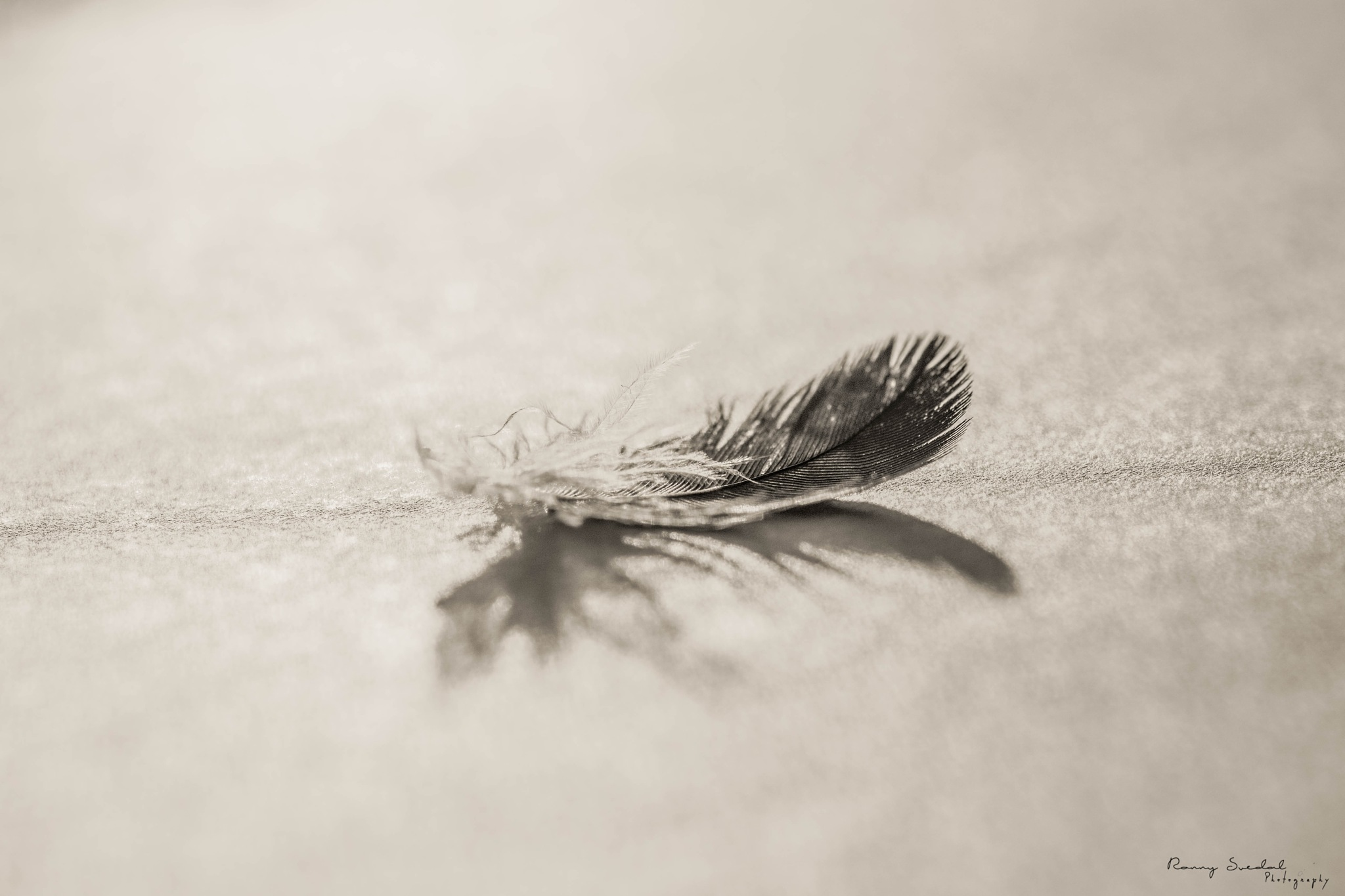 Feather by Ronny Johansen Svedal
