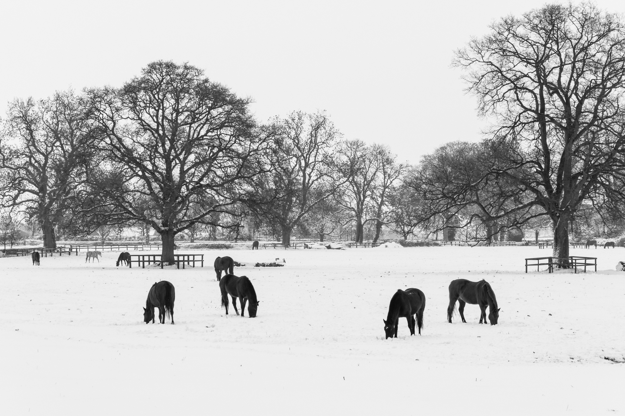 Beaufort Horse In The Snow by Anthony_Mitchell