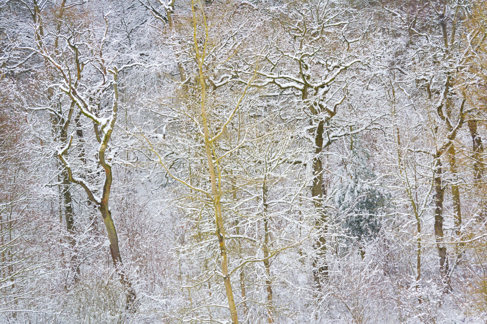 Frozen Tree Abstract by Anthony_Mitchell