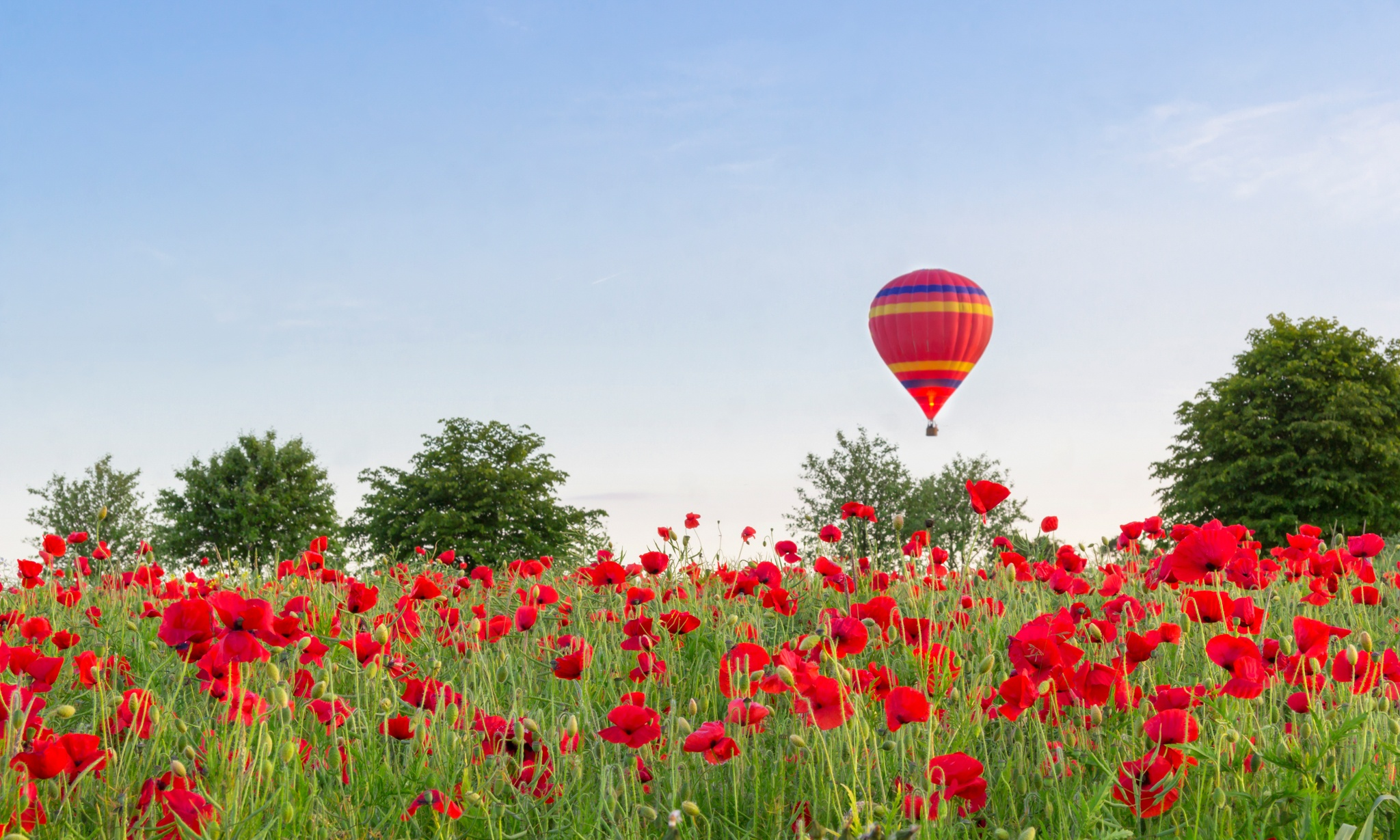Balloon Over Poppy Field by Anthony_Mitchell