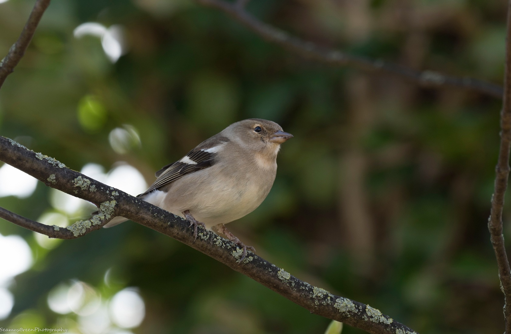 Bird in the Woods by seamusbreenphotos