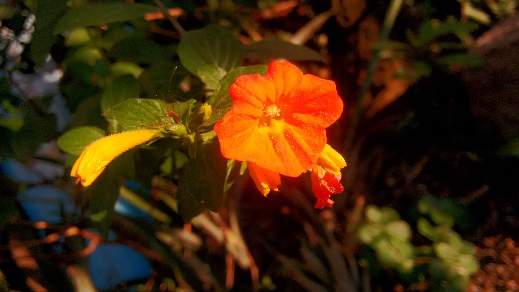 Orange flower by marcelooliveirra