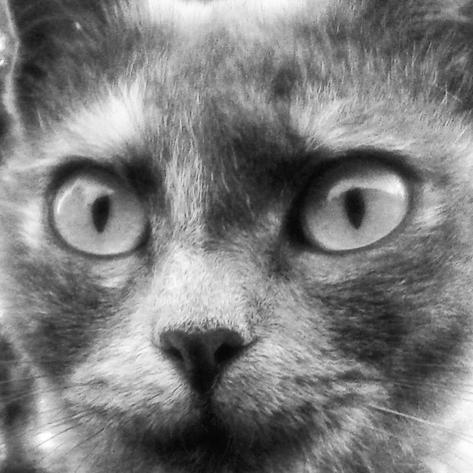 Pussycat... by Lucia Tonon