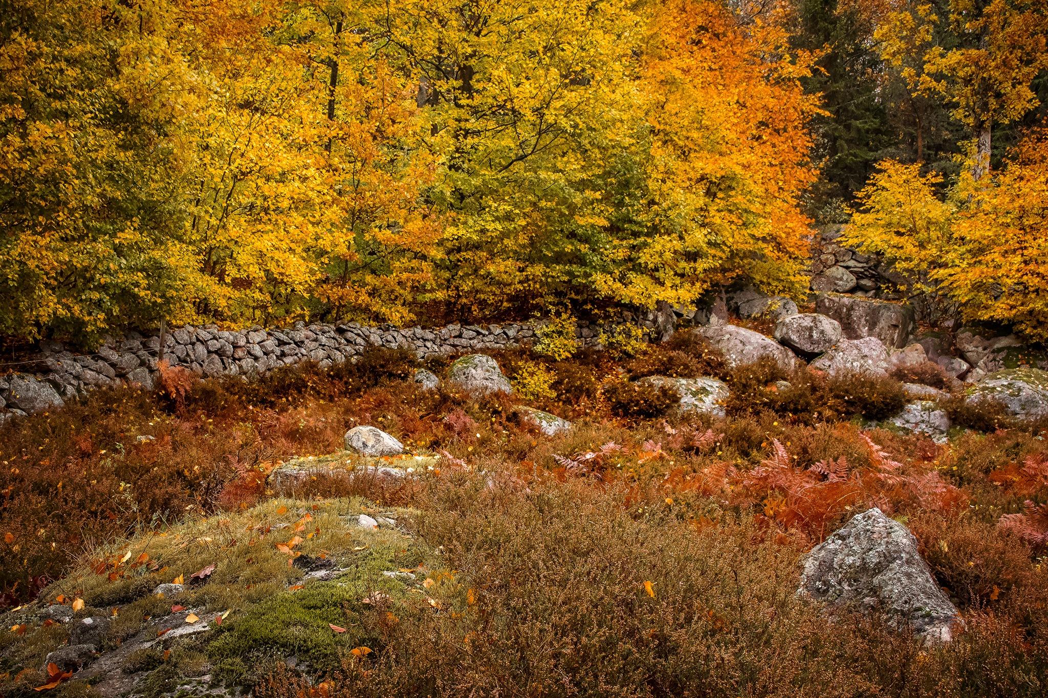 Autumn landscape by elisah
