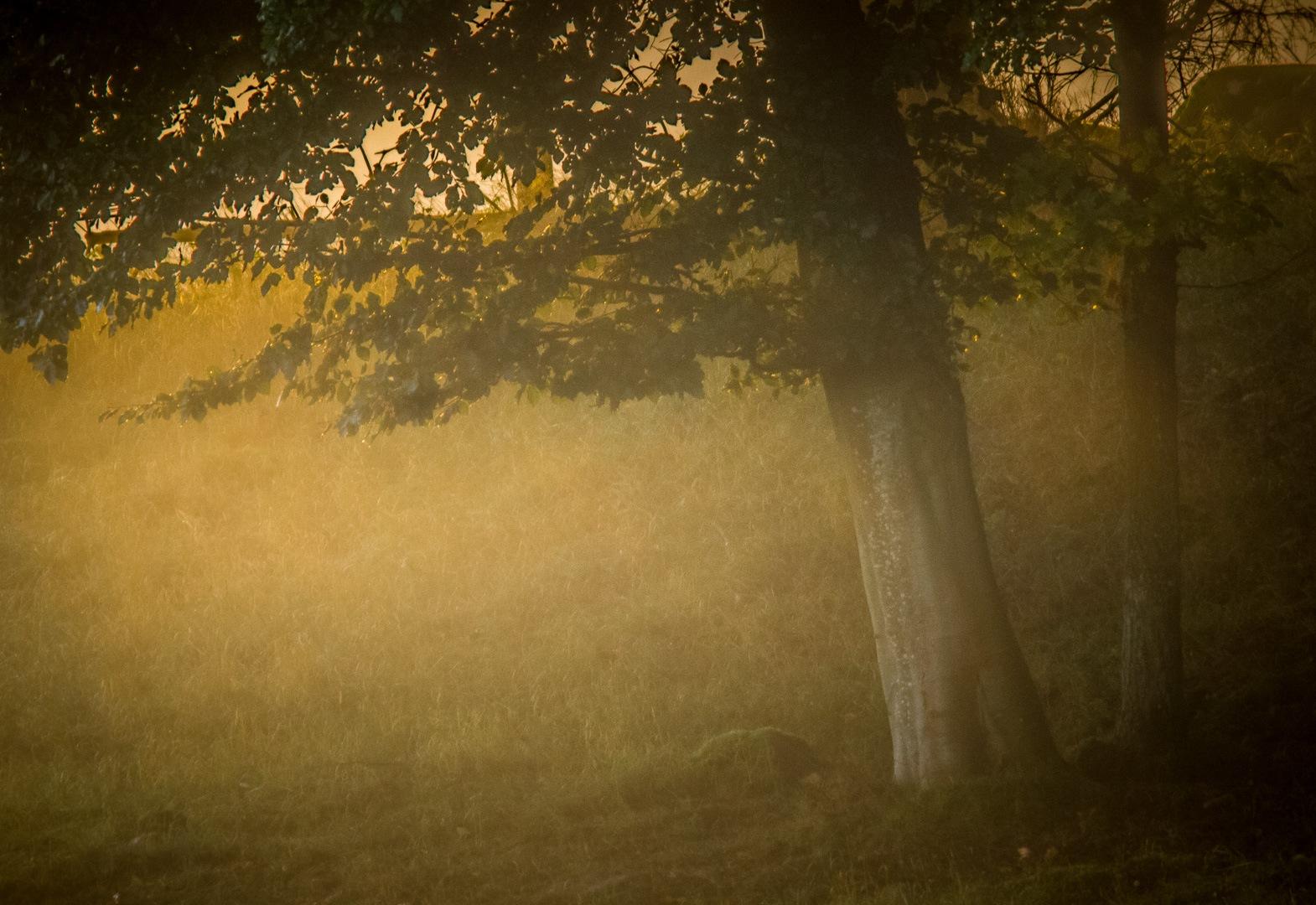 Dawn by elisah