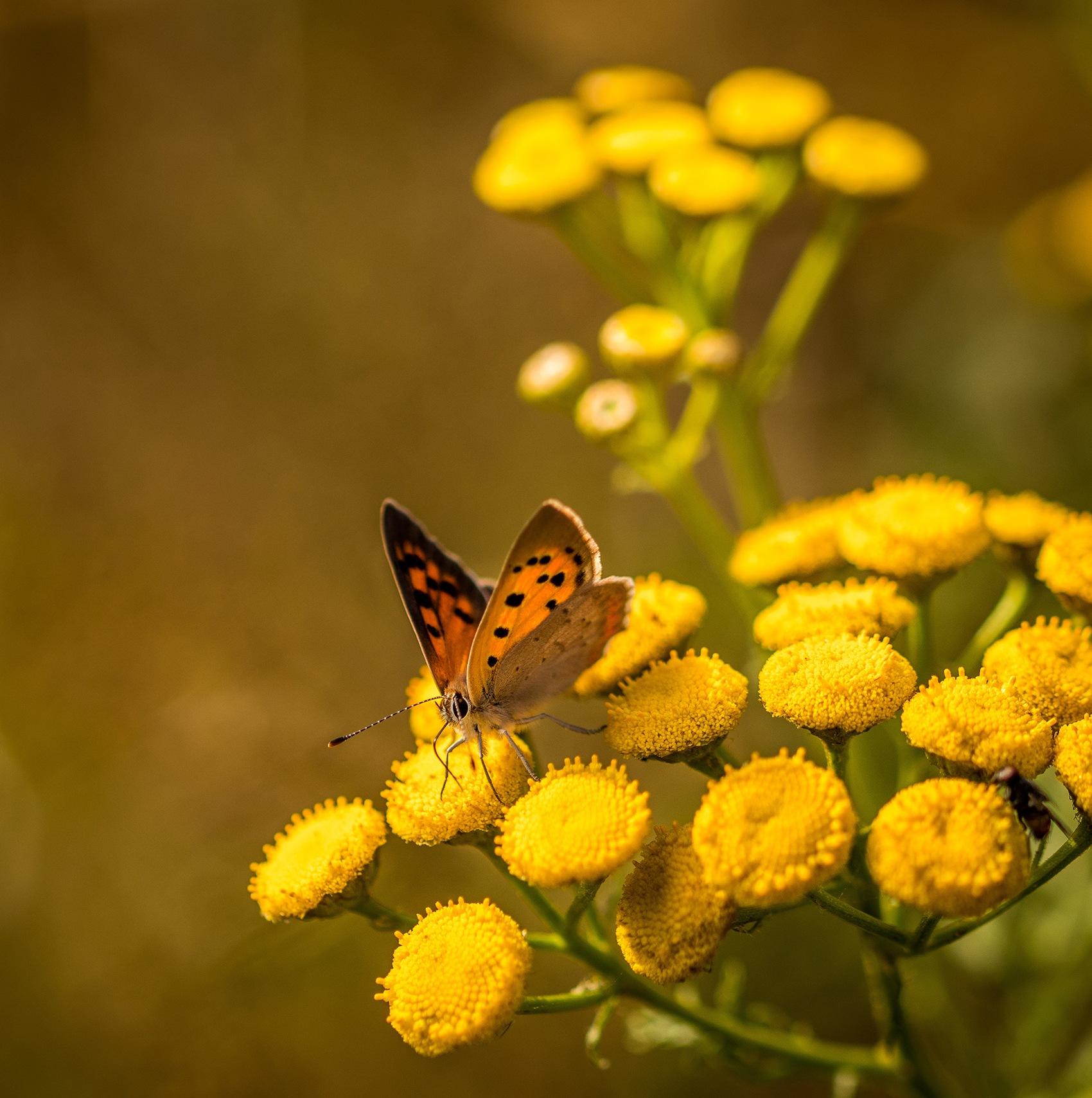 A glimpse of autumn colours by elisah