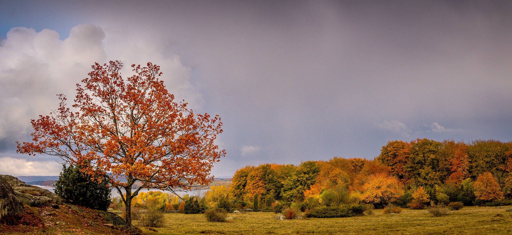Young oaktree in autumn landscape by elisah
