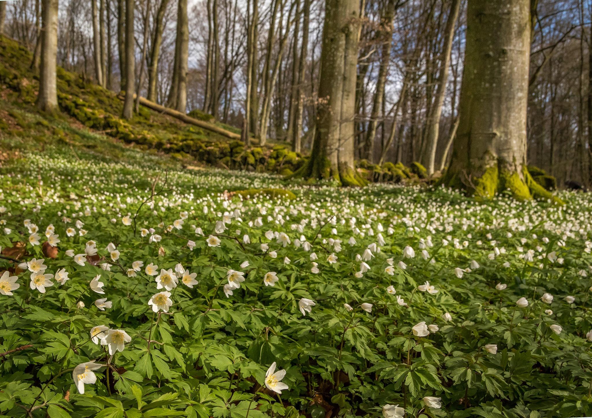 Spring flower carpet by elisah