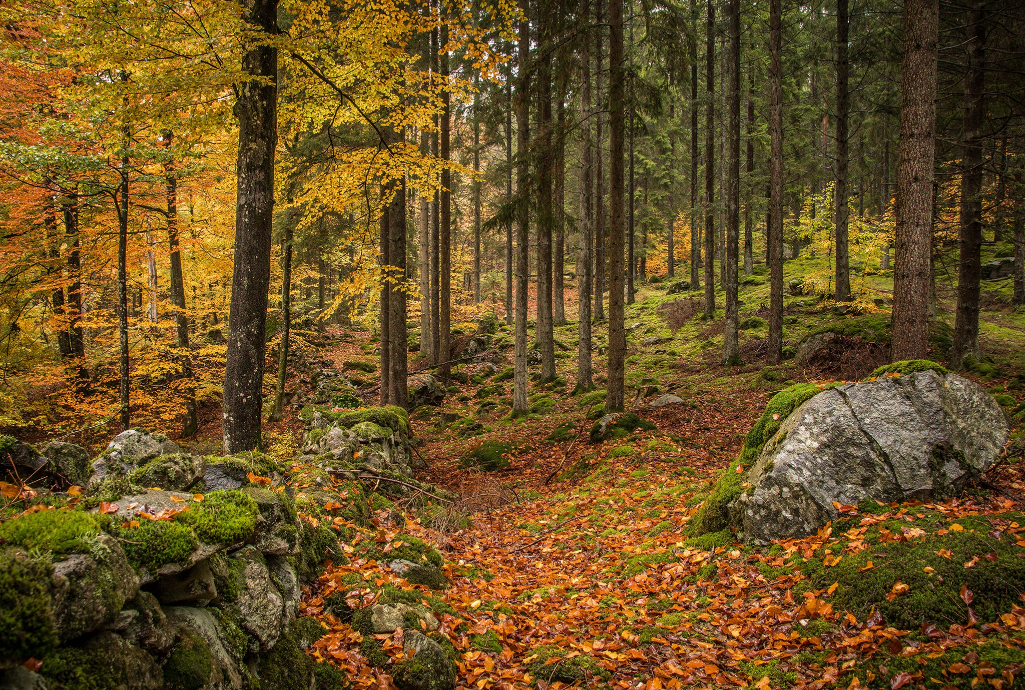 Forest view by elisah