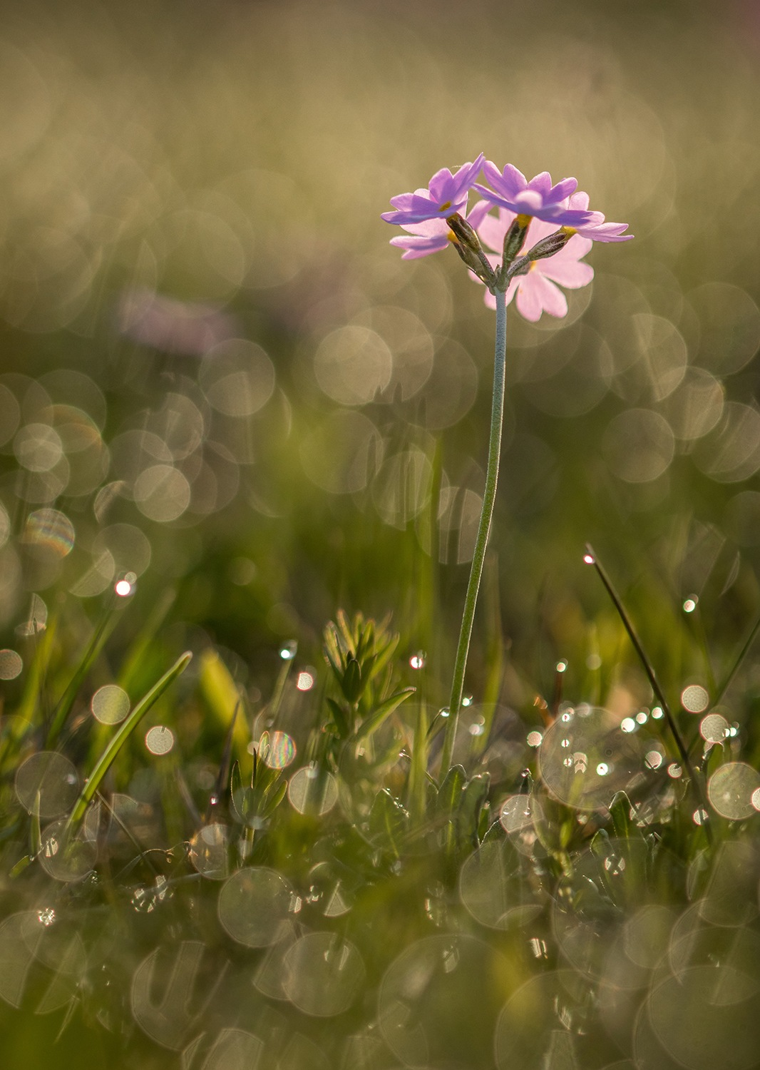 In the morning dew by elisah