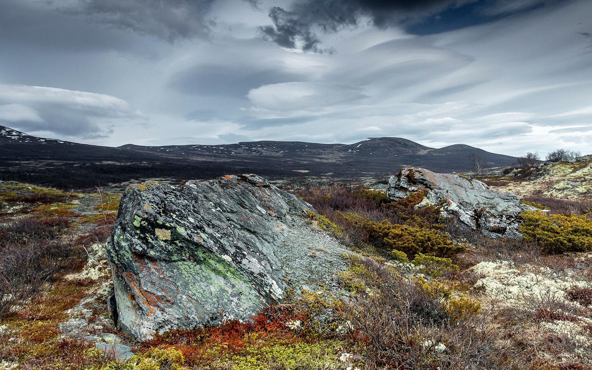 Arctic spring by elisah