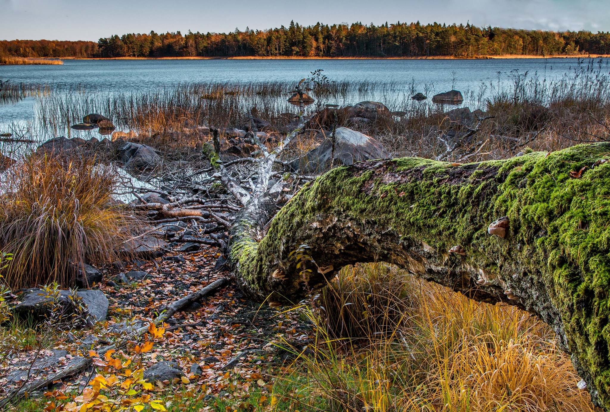 Lake view by elisah