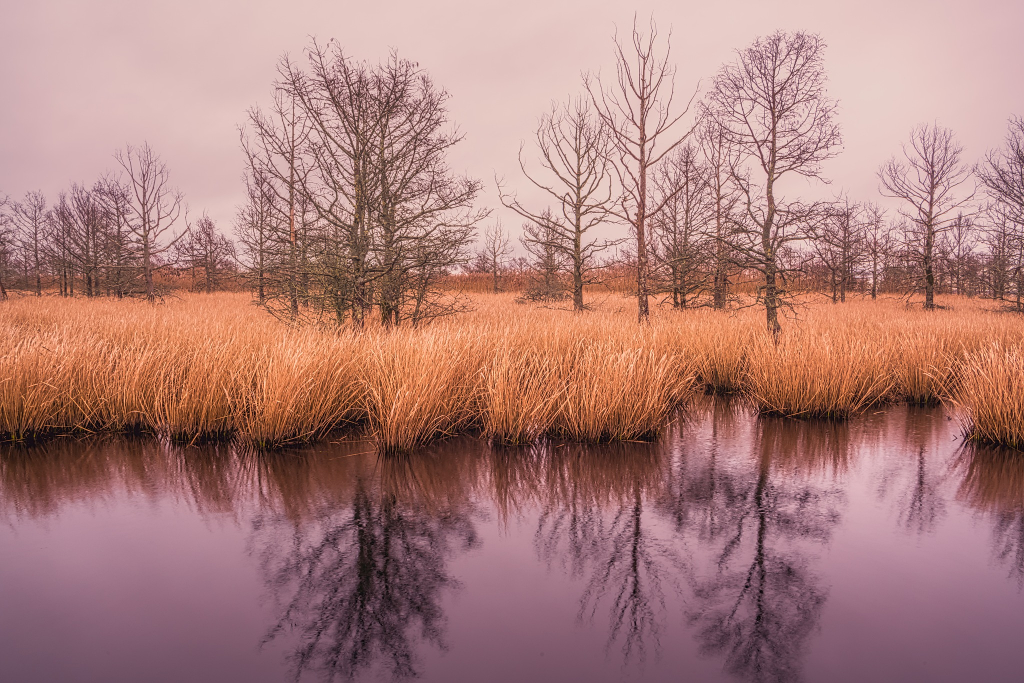 Reflections of a Overcast Day by rsmullen