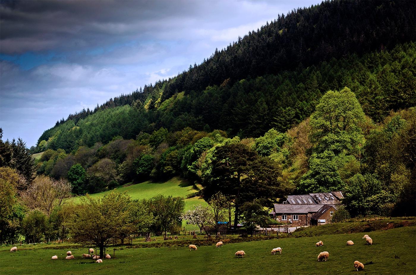 on the farm by edwinphillips
