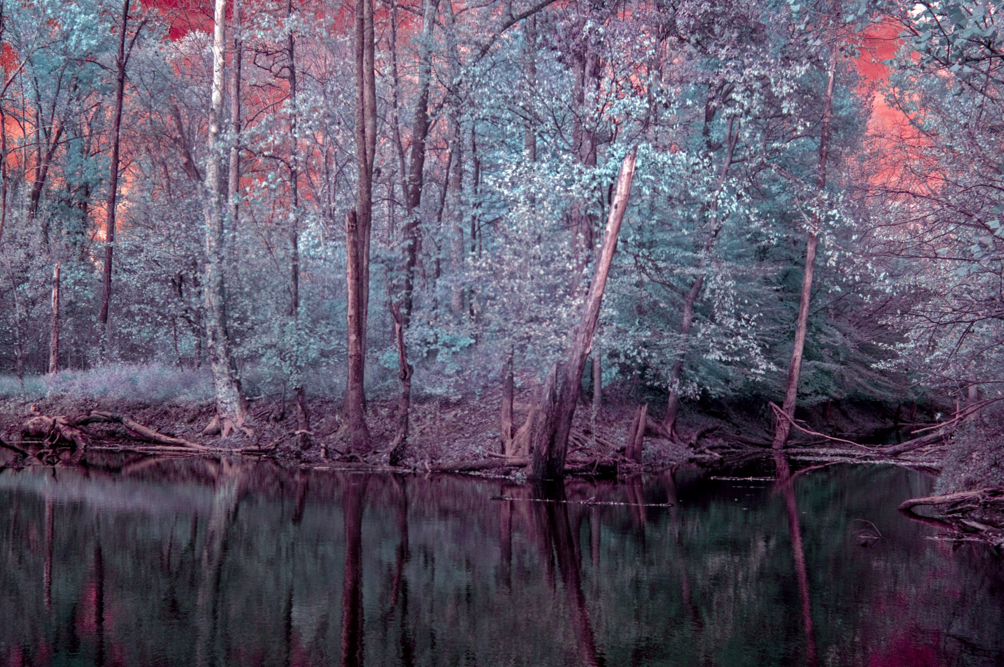 Indiana Backroads Infrared Creekbed by Dean Francisco
