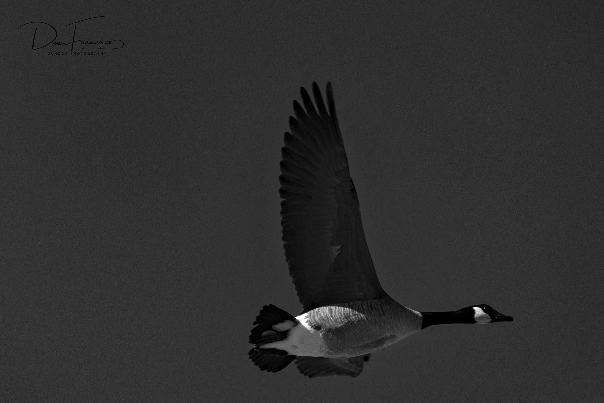 The Goose by Dean Francisco