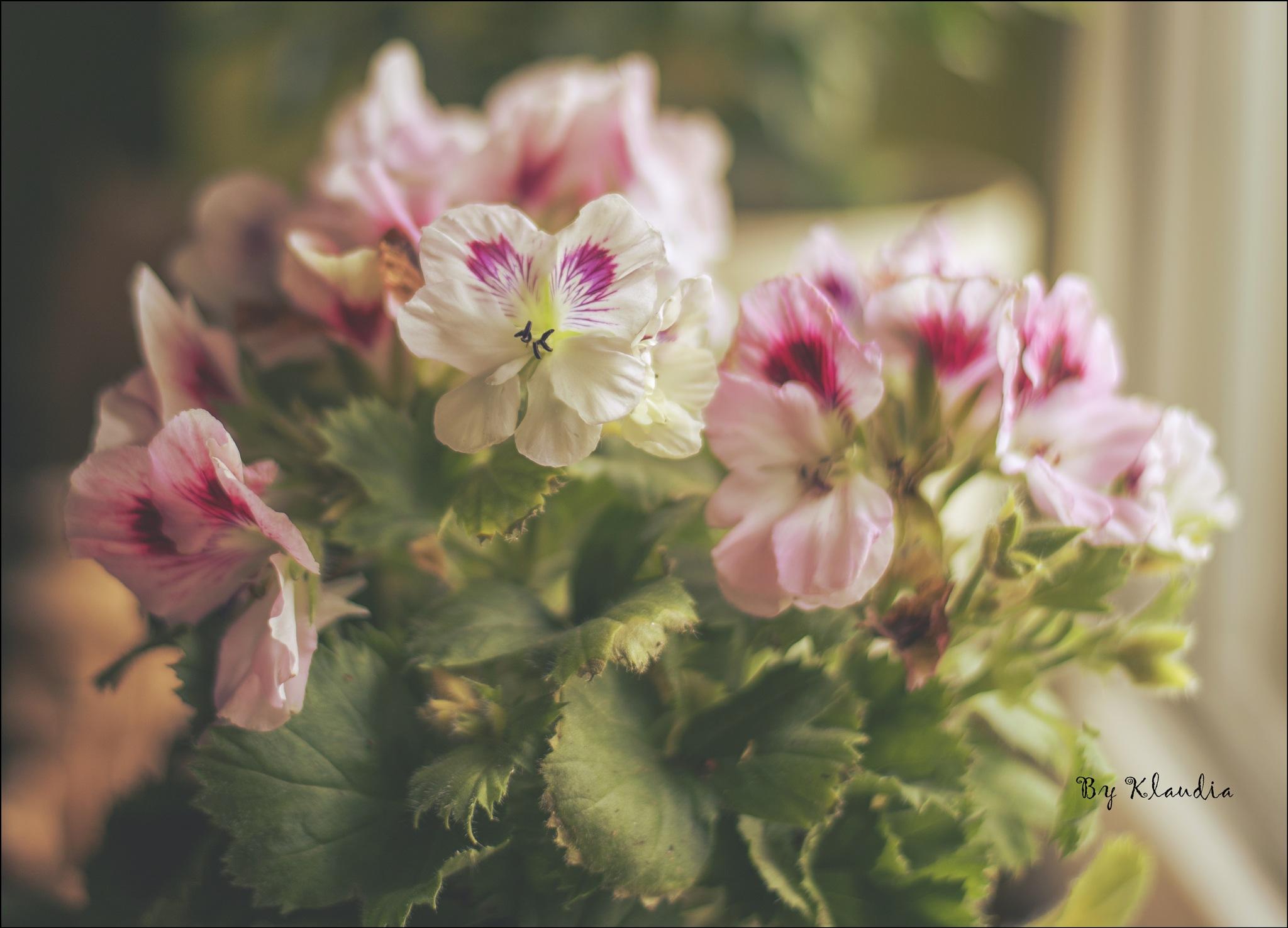 Wiosennie  by Klaudia Bochenek