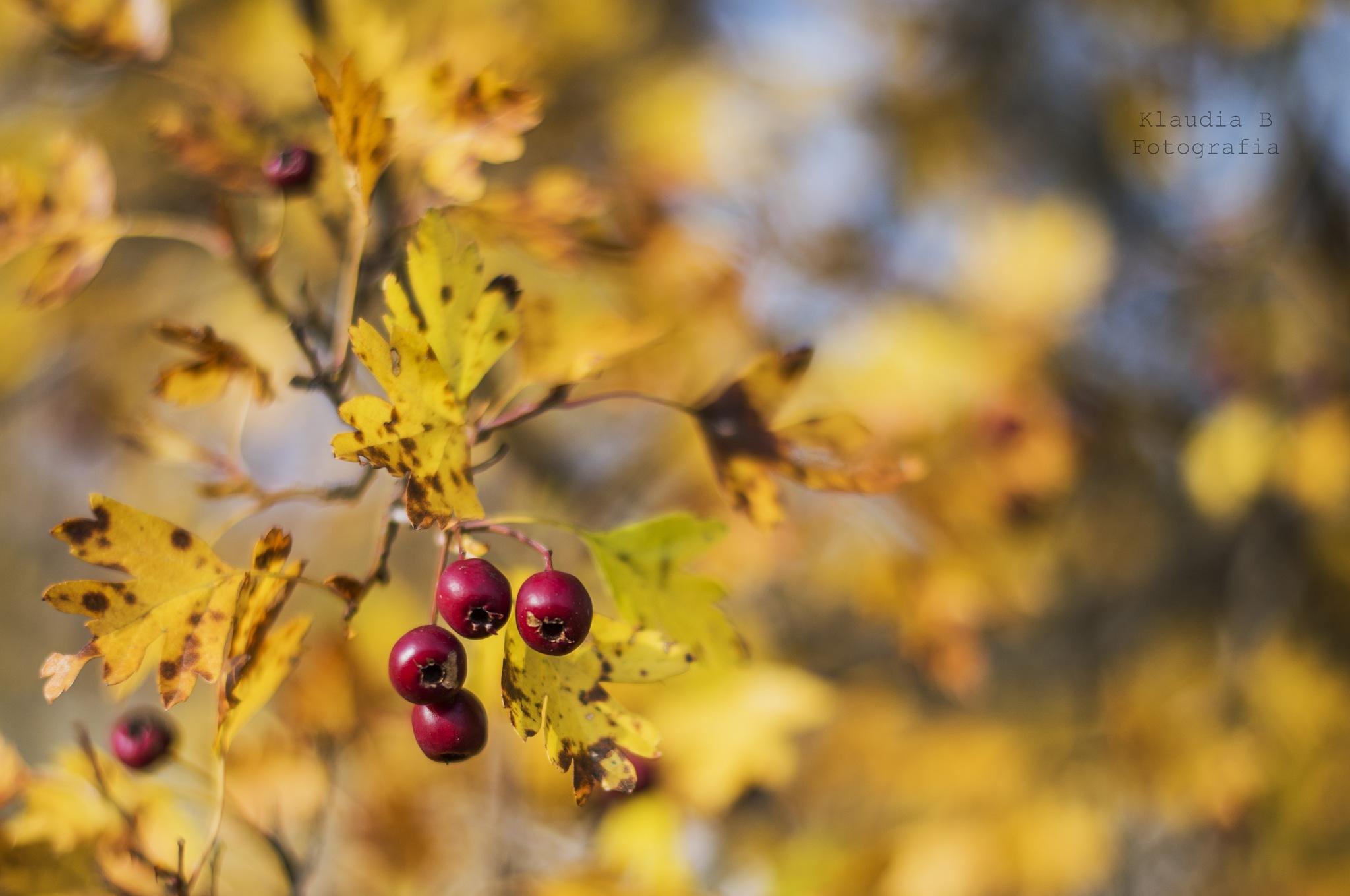 Barwy jesieni  by Klaudia Bochenek