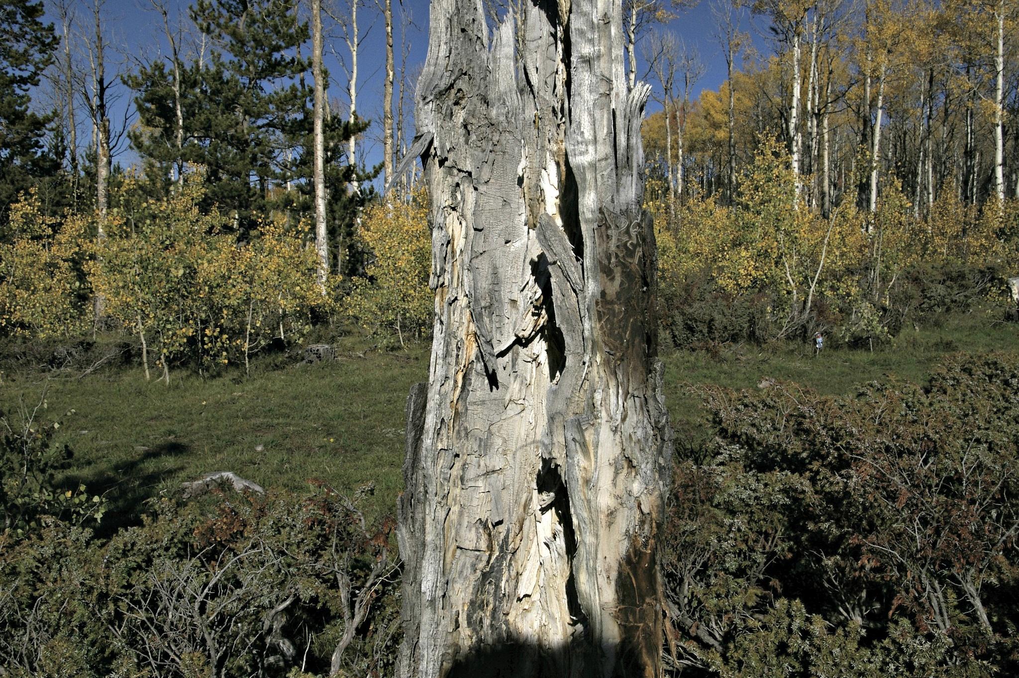 Tree Trunk by Rashelle