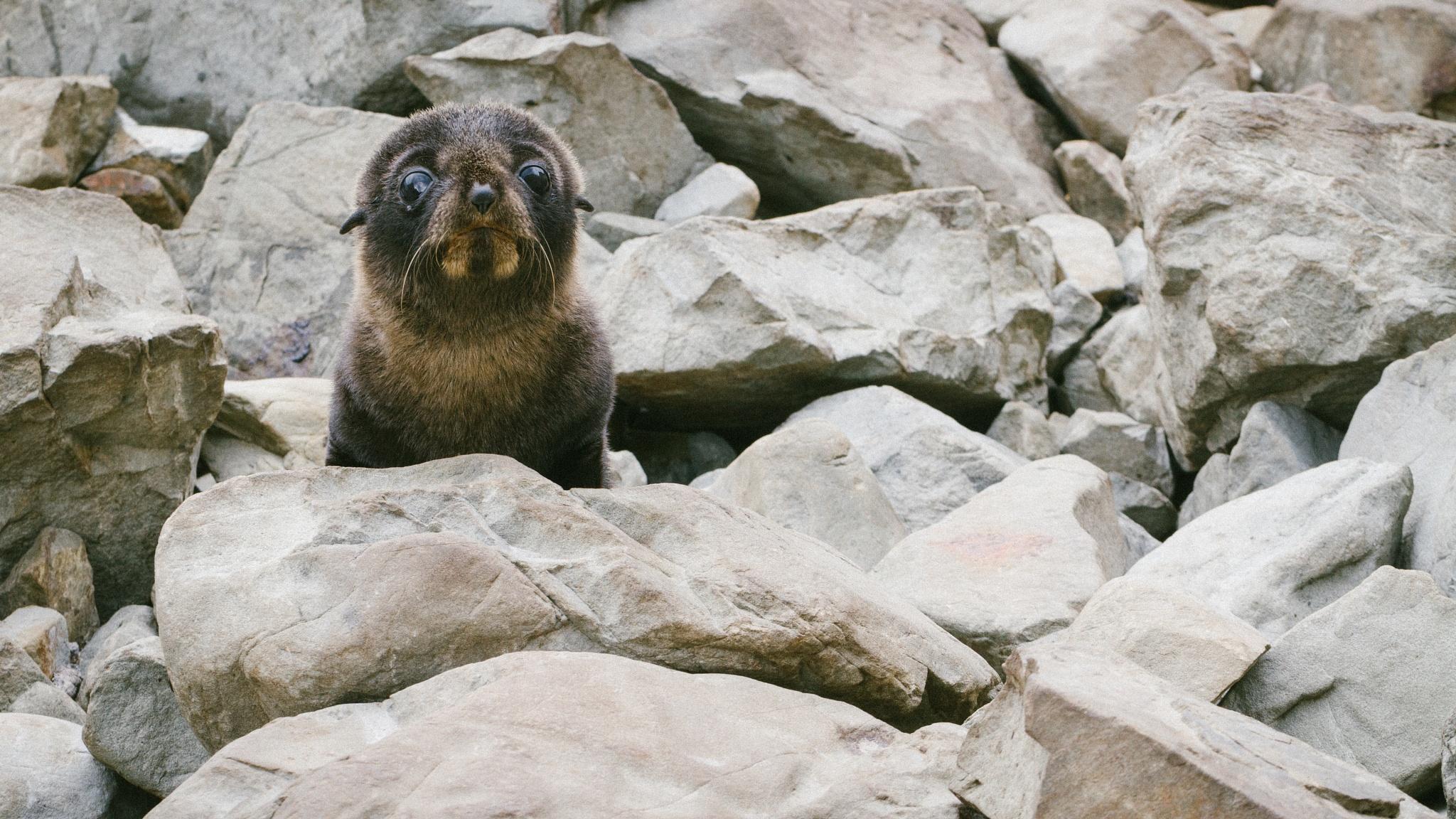 Seal Colony by Inbal Rubin