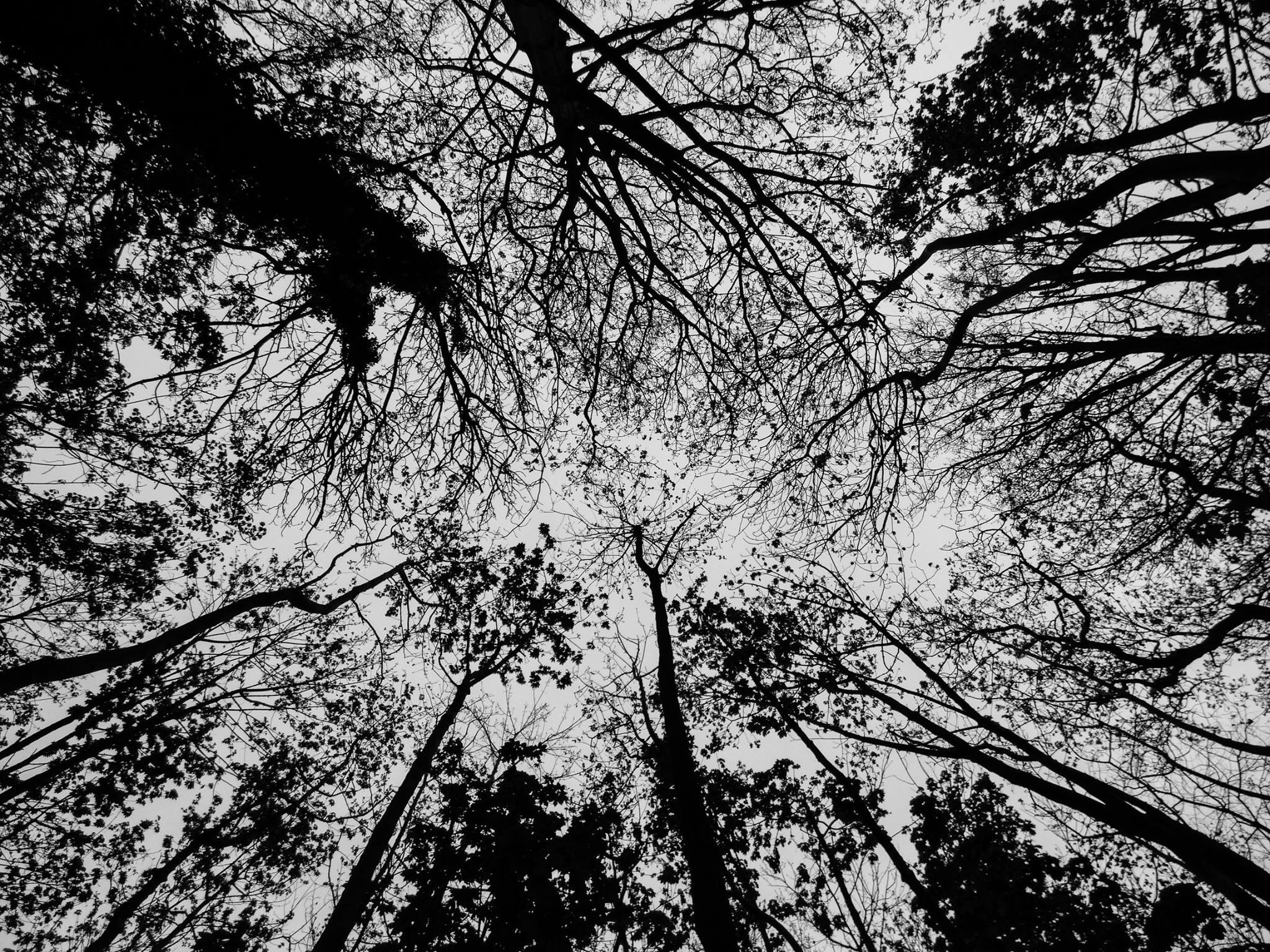 Looking up at the branches  by Ross Hammond