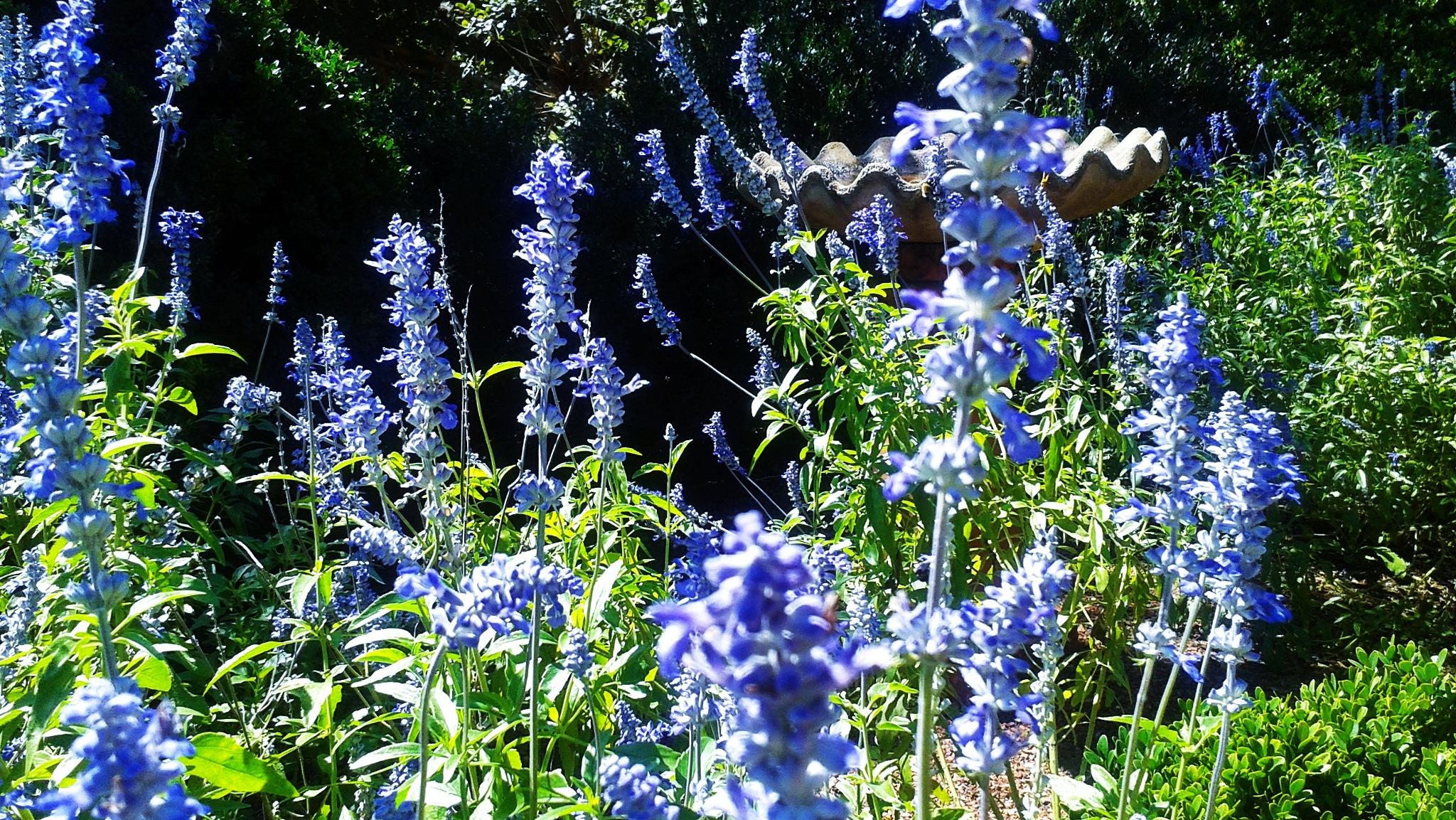 Lavender in the Garden by Julie Piwaron