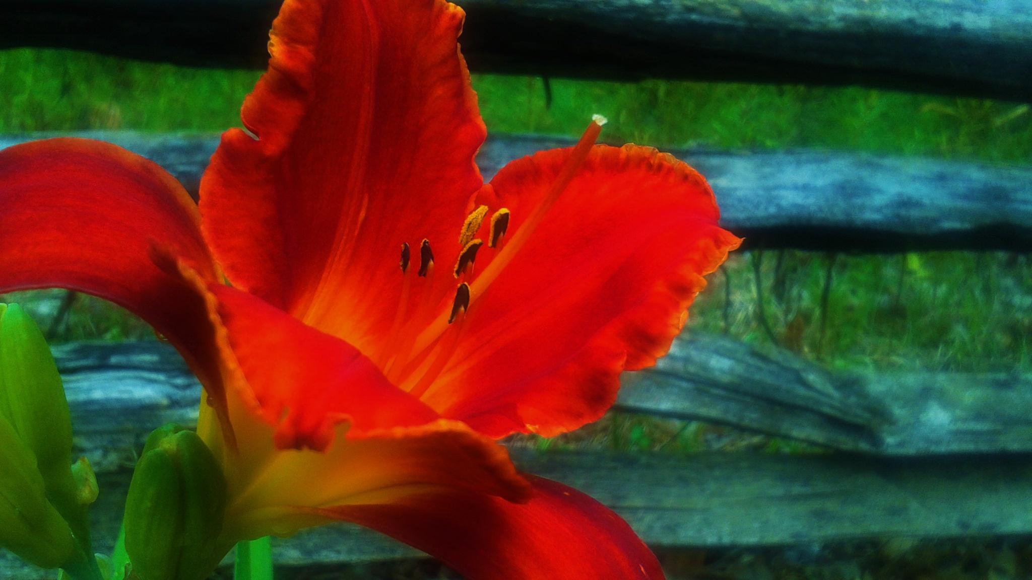 Photo in Nature #summer #flower #sandysprings #georgia