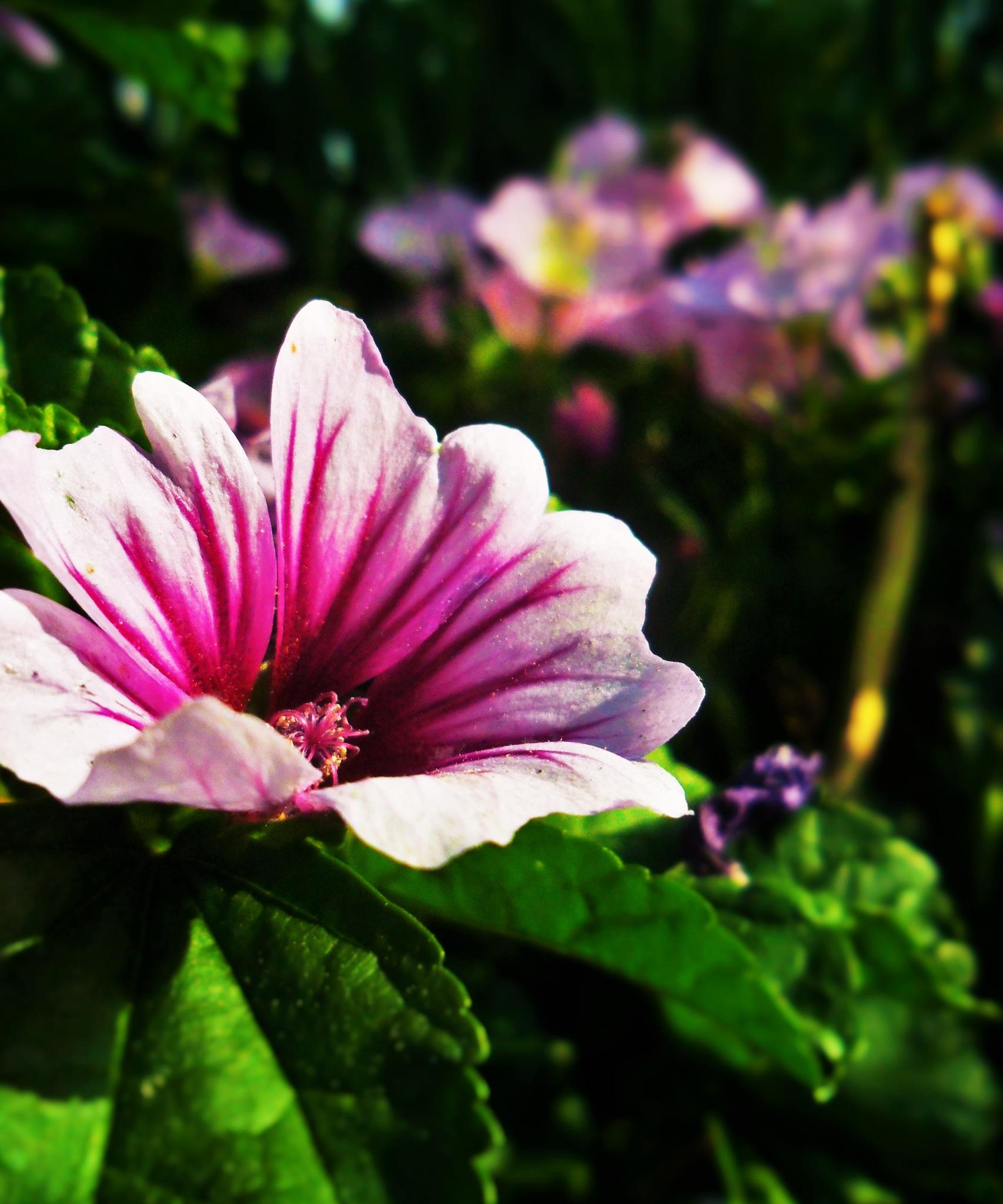 Photo in Nature #summer #petunias #marietta #georgia
