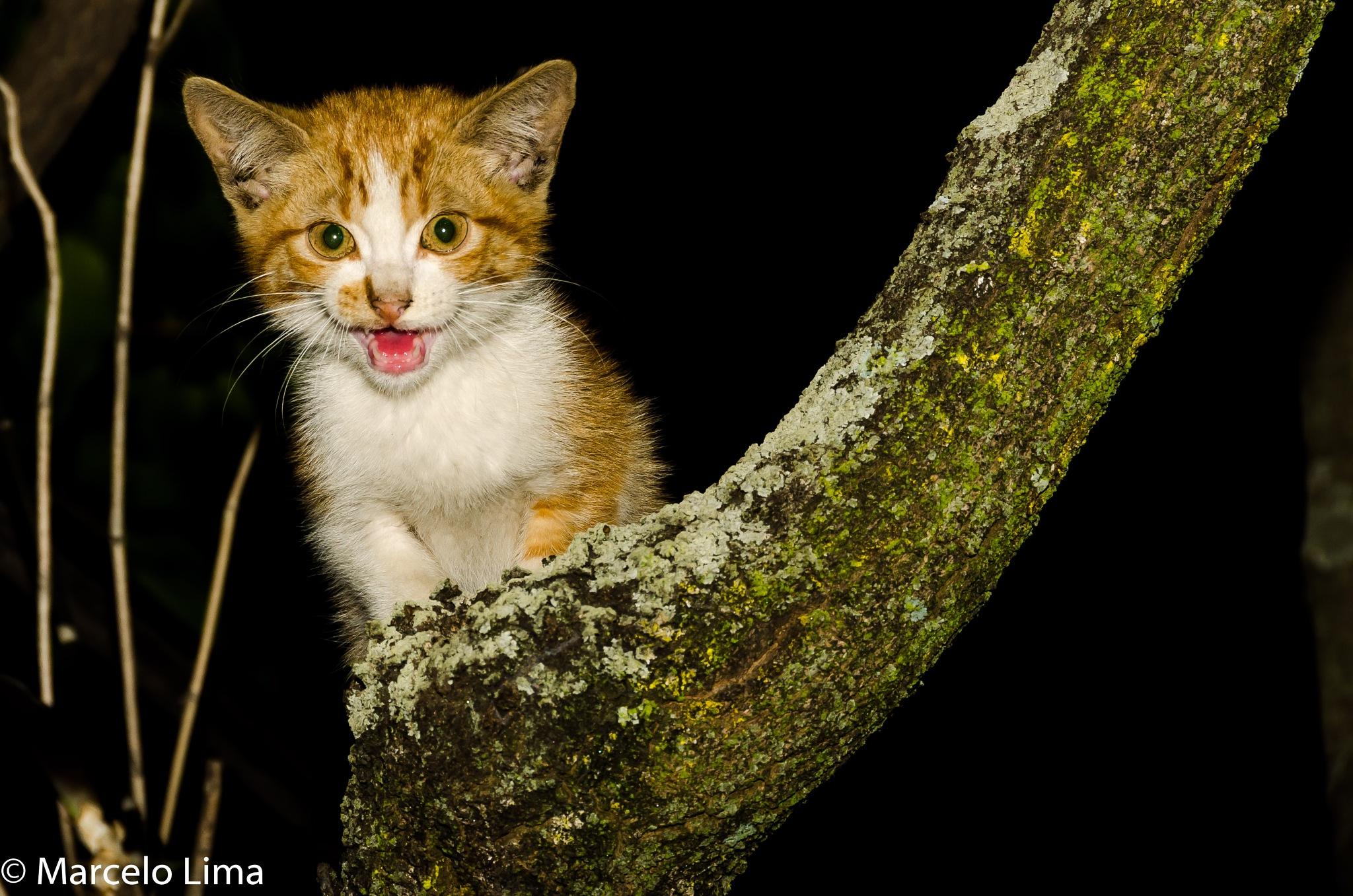 Cat by Marcelo Lima